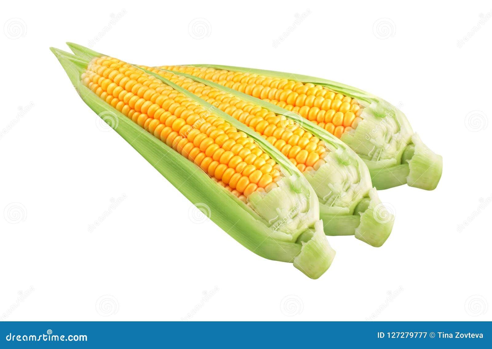 Mais auf dem weißen Hintergrund lokalisiert
