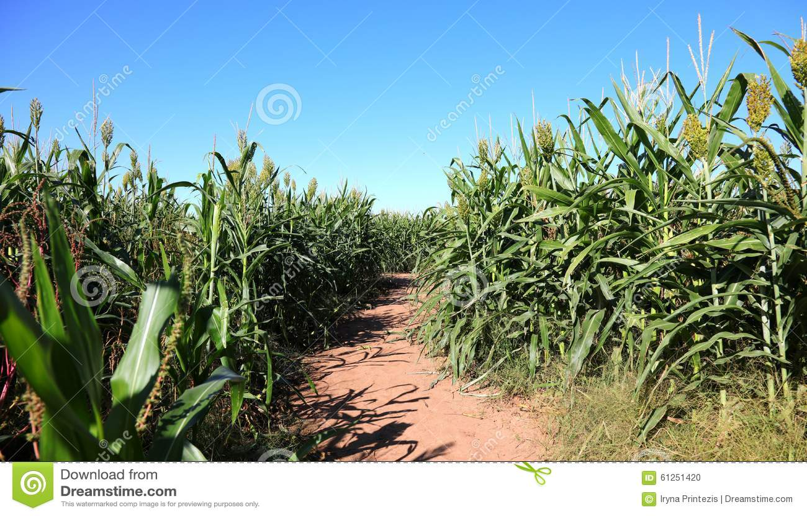 Mais Maze Path