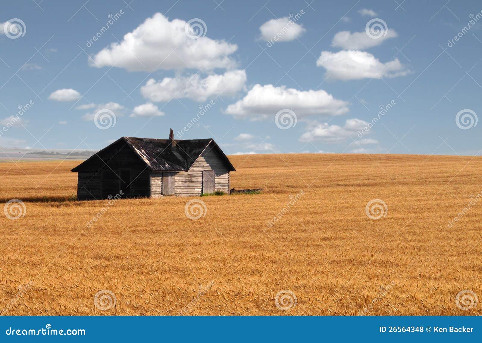 Maison abandonnée dans le domaine de blé de prairie.