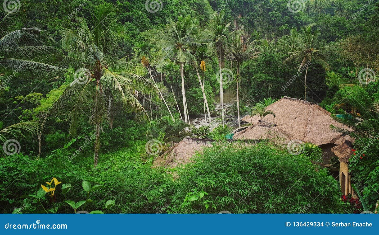Maison de jungle