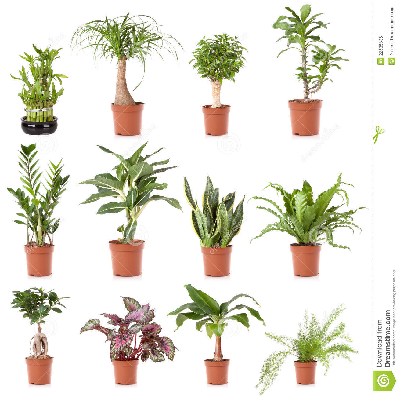 Maison de plante en pot photo stock image du l gant for Plante maison