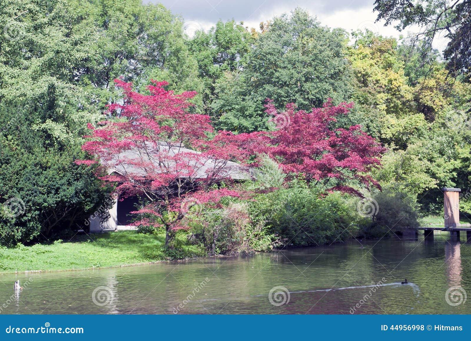 Maison de th japonaise dans le jardin anglais munich for Jardin anglais munich naturisme