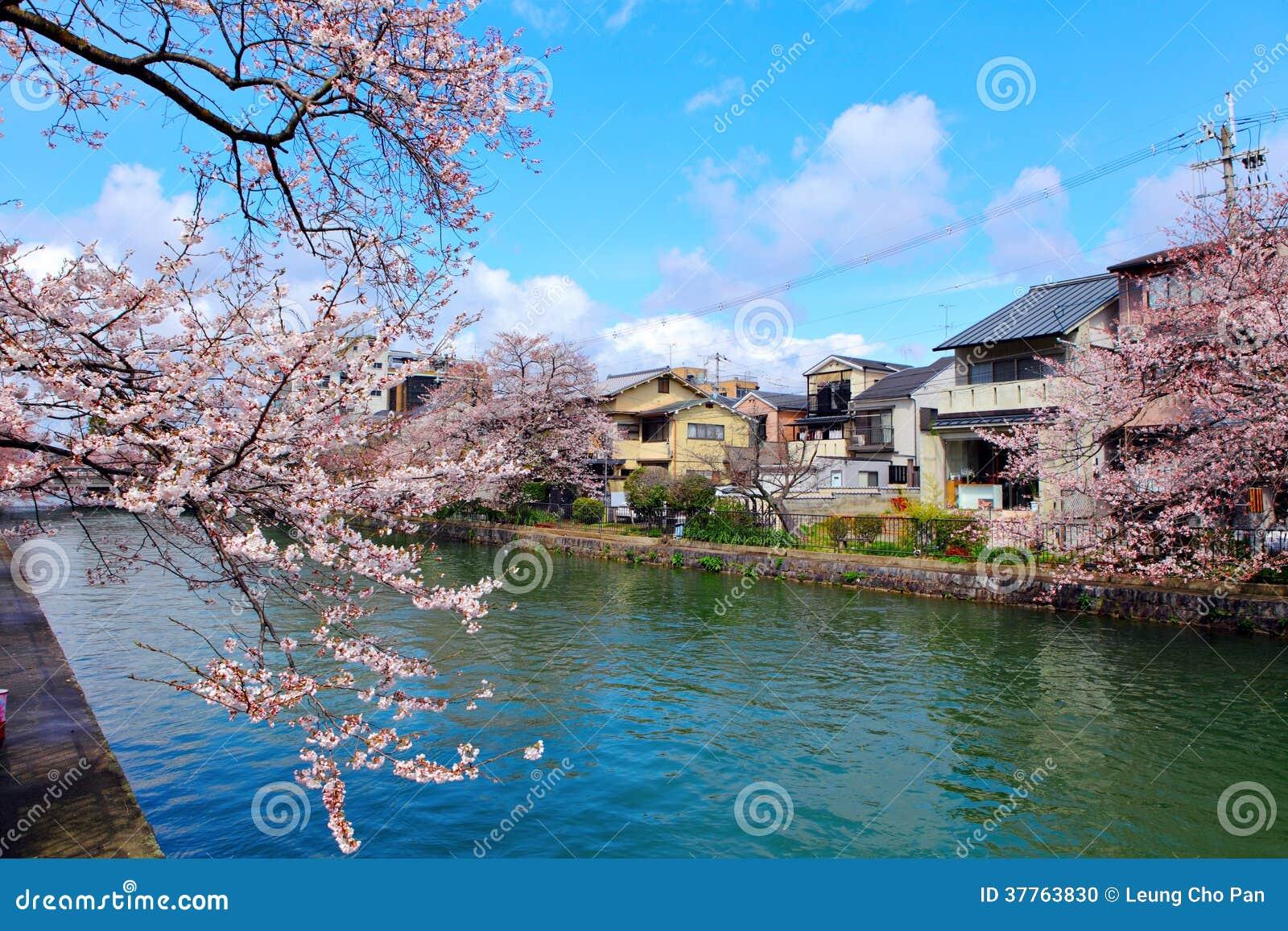 maison traditionnelle au japon avec sakura photo stock. Black Bedroom Furniture Sets. Home Design Ideas