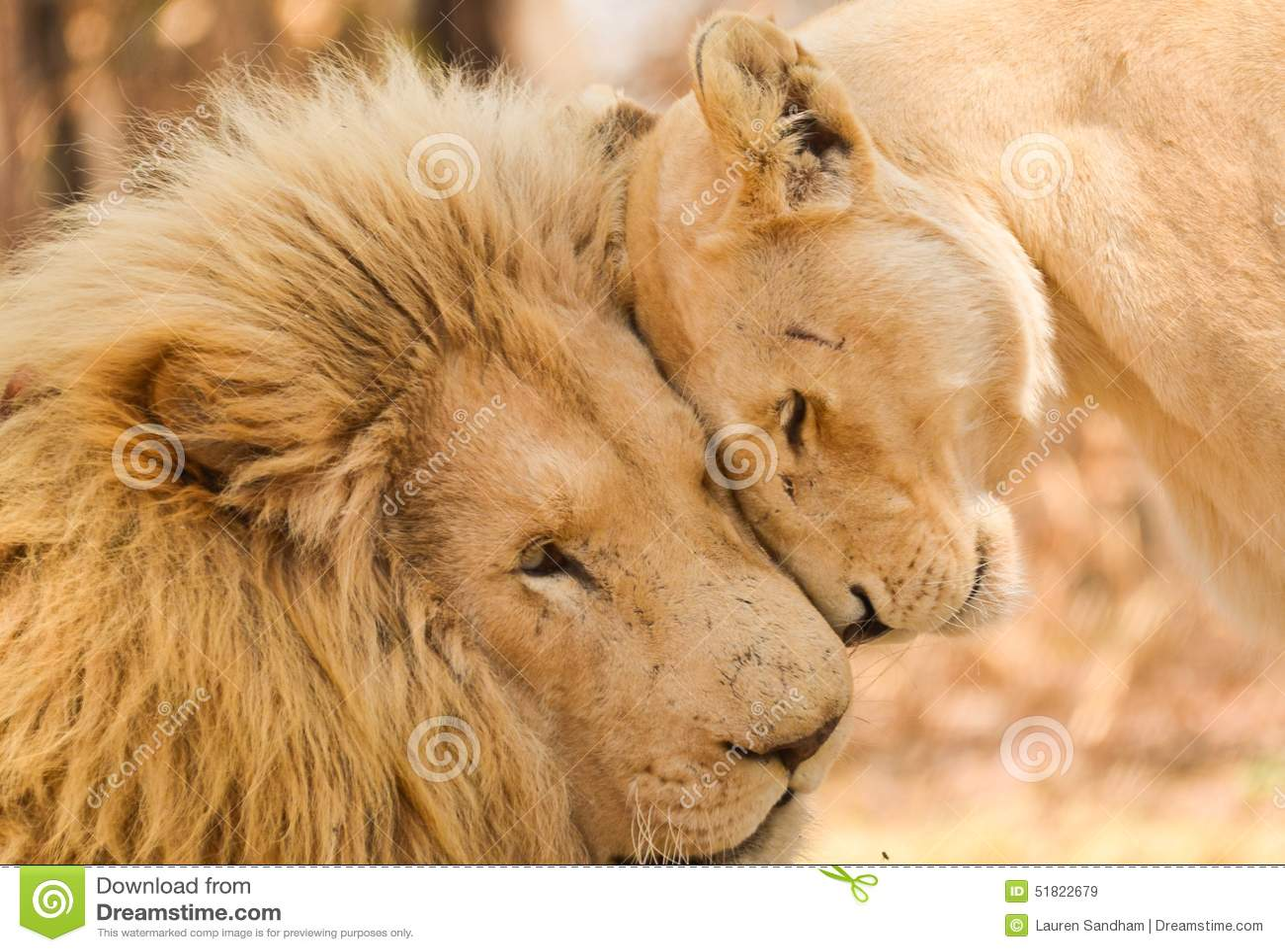 Majestätische Liebe