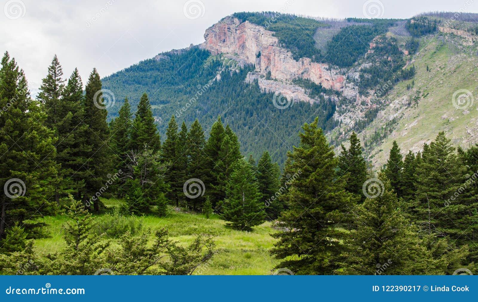 Majestatyczny halny szczyt i pochylania zbocze zakrywający z luksusowym lasem blisko Bozeman, Montana