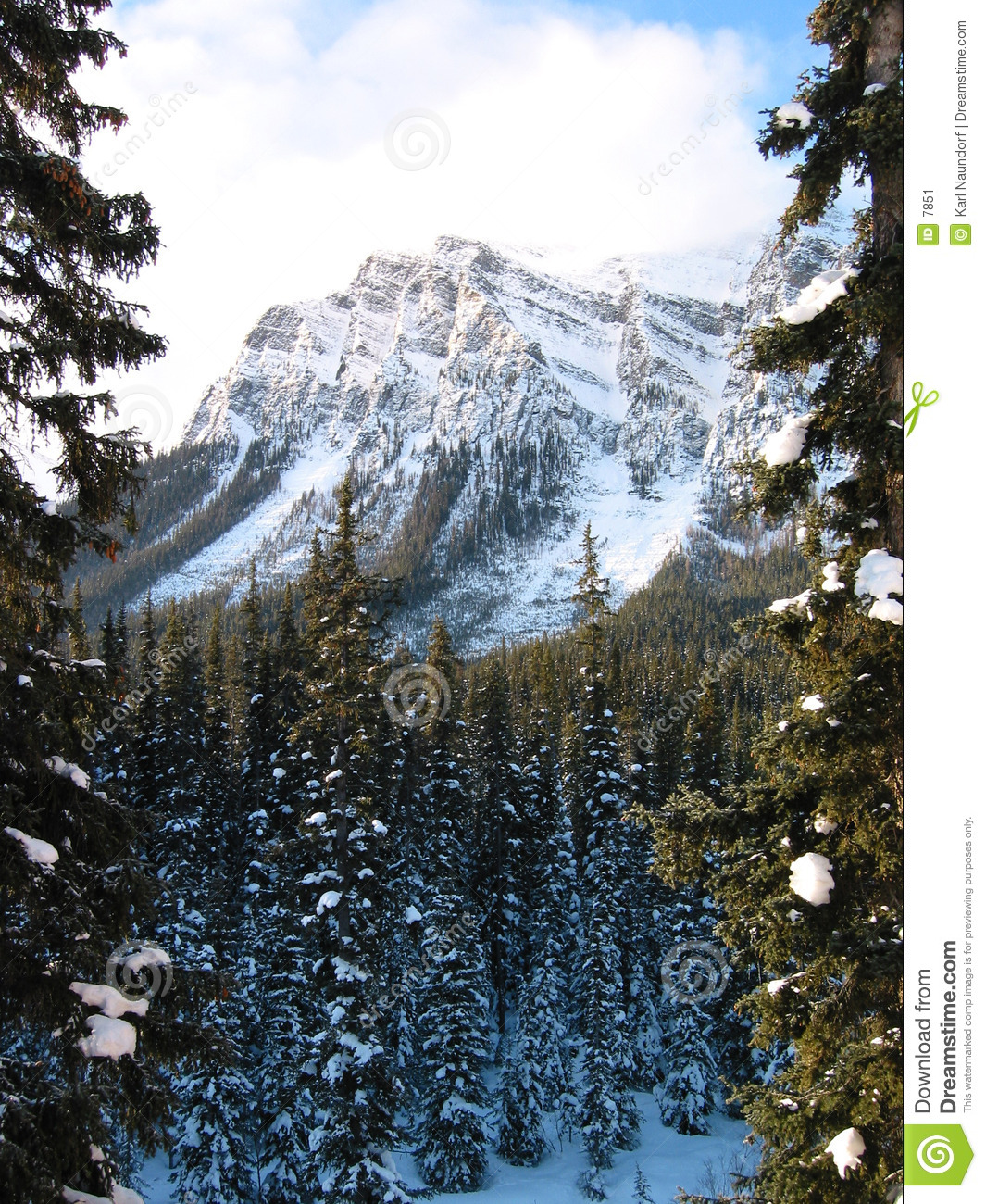 Majestic mountain with a snowy forest 2
