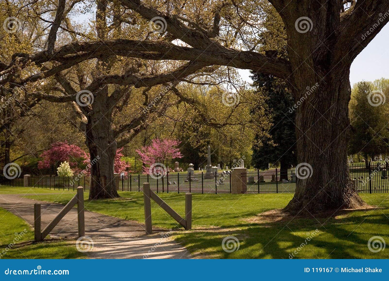 Majestic Oaks Guard a Cemetery