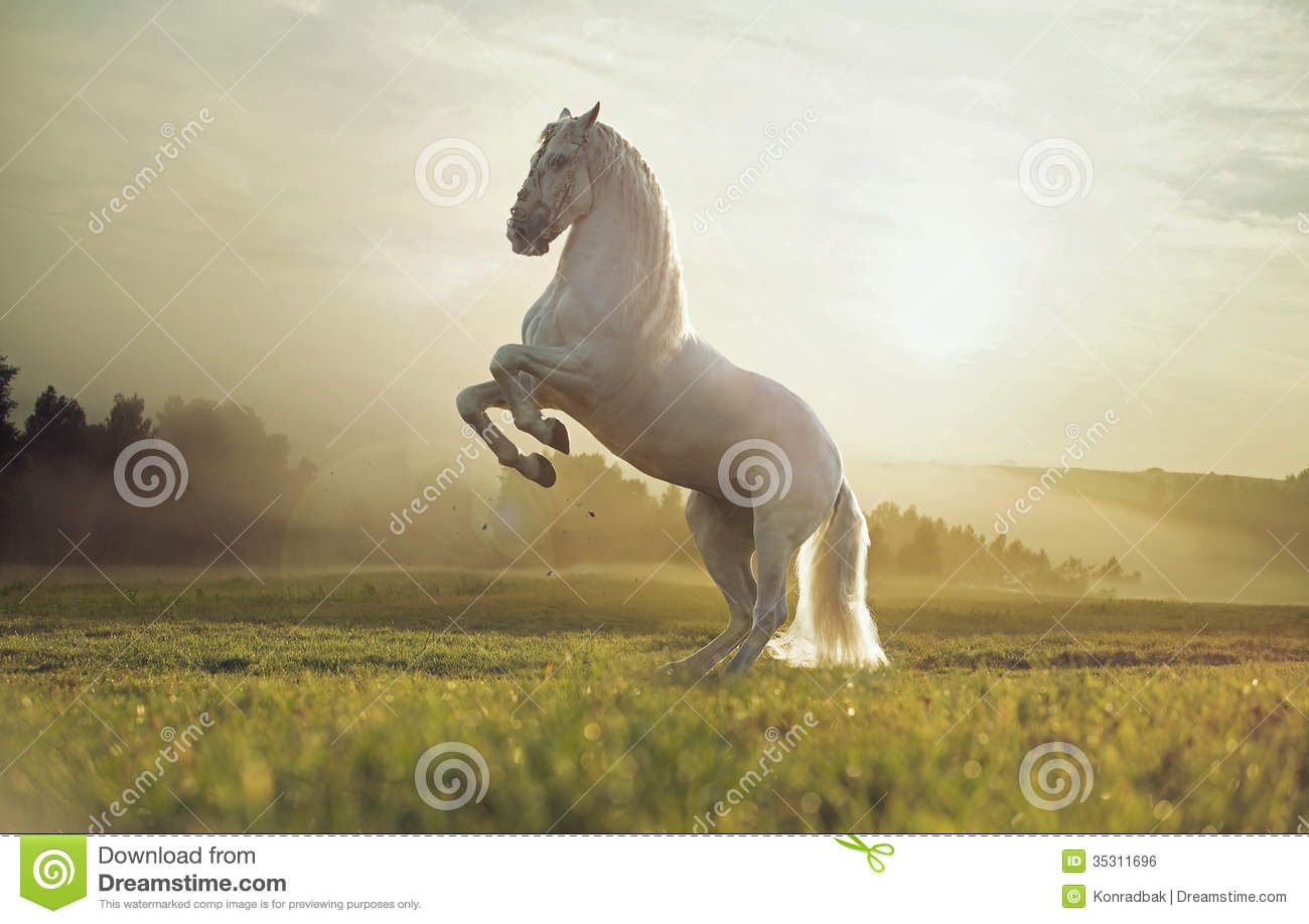 horses running in a meadow