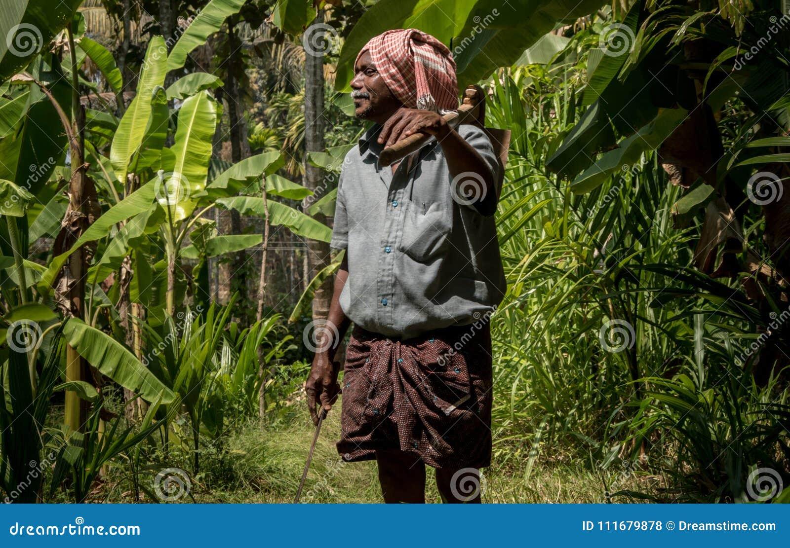 Banana tree Agriculture in kerala