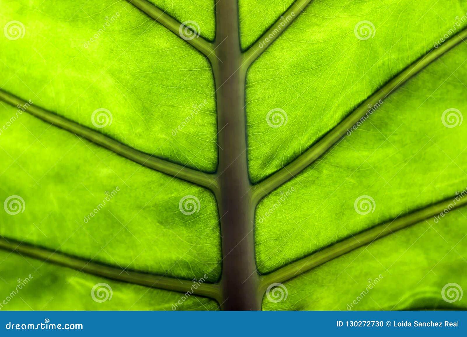 Makro av ett blad av en växt