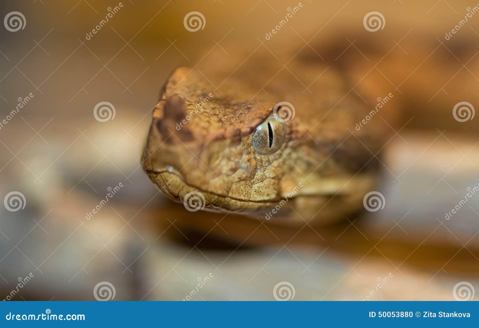 Makro av ett ormhuvud