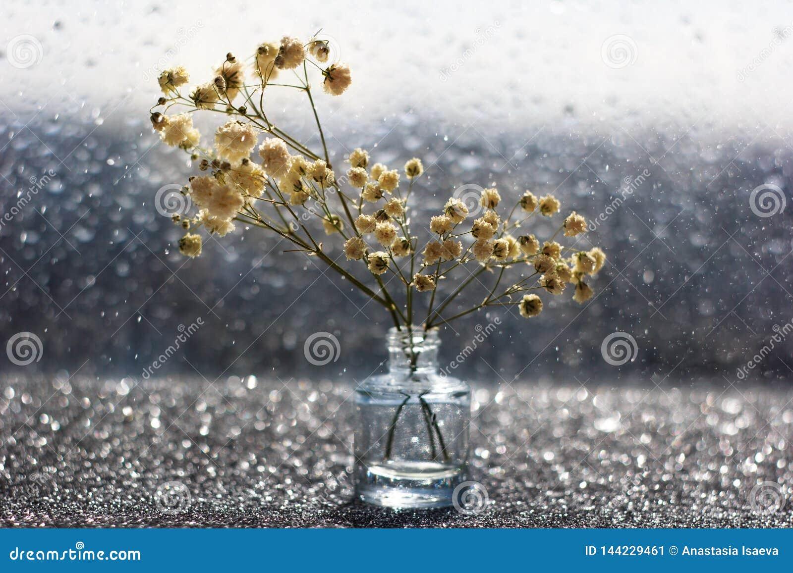 Makro- biali kwiaty z zamazanym bokeh w spokojnym życiu