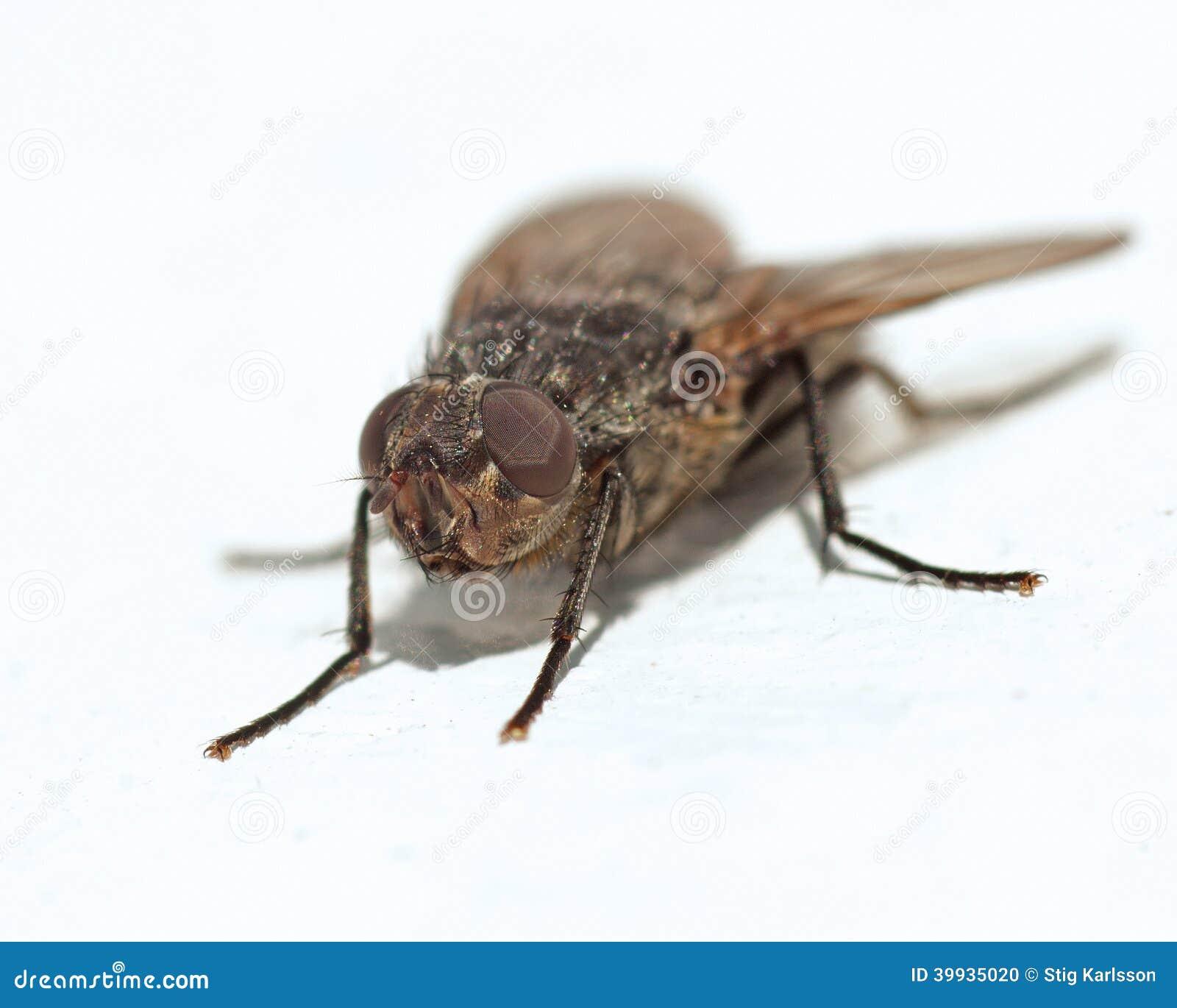 Makro- domowa komarnica