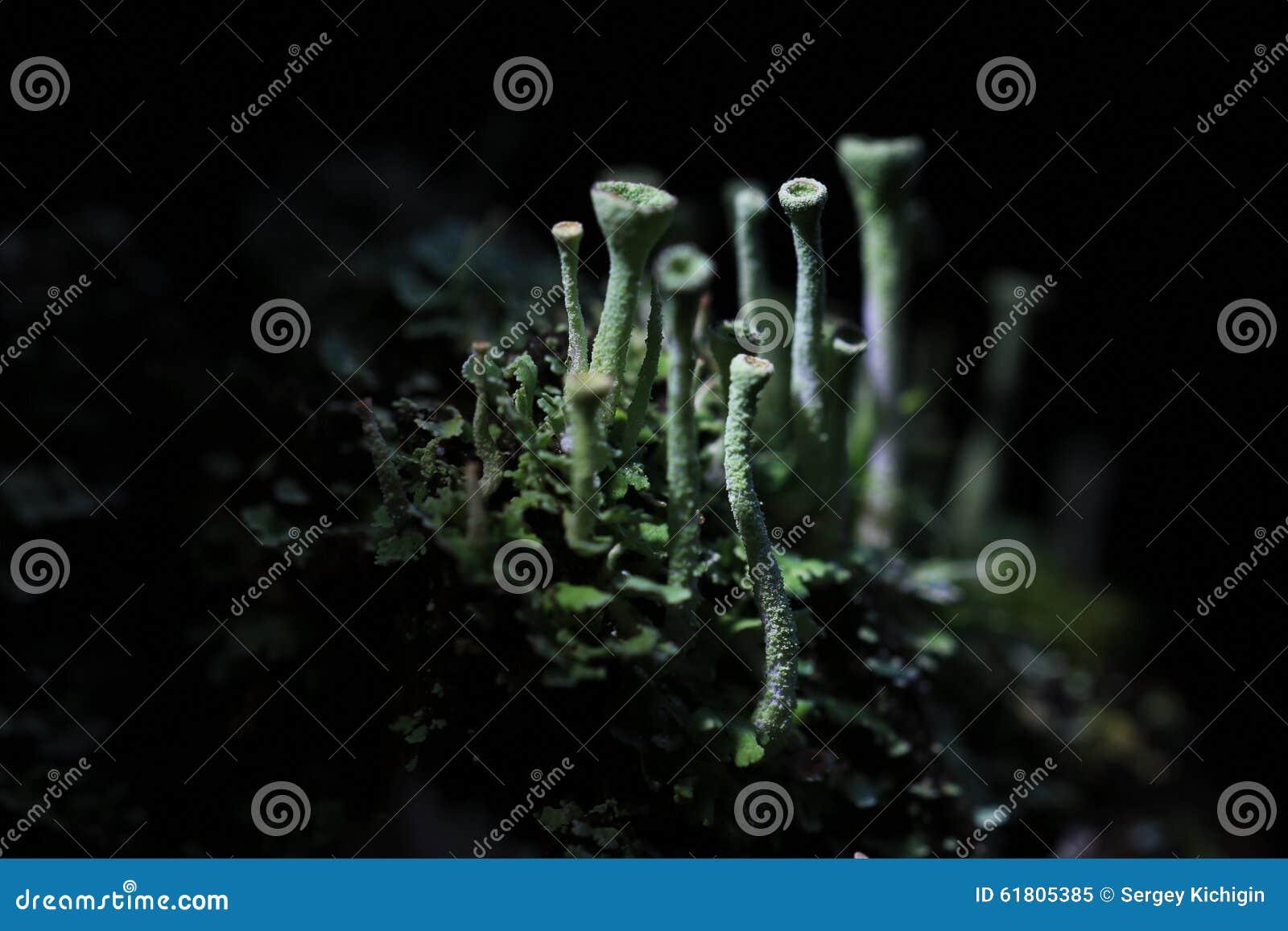 Makro- grzyb pieczarka