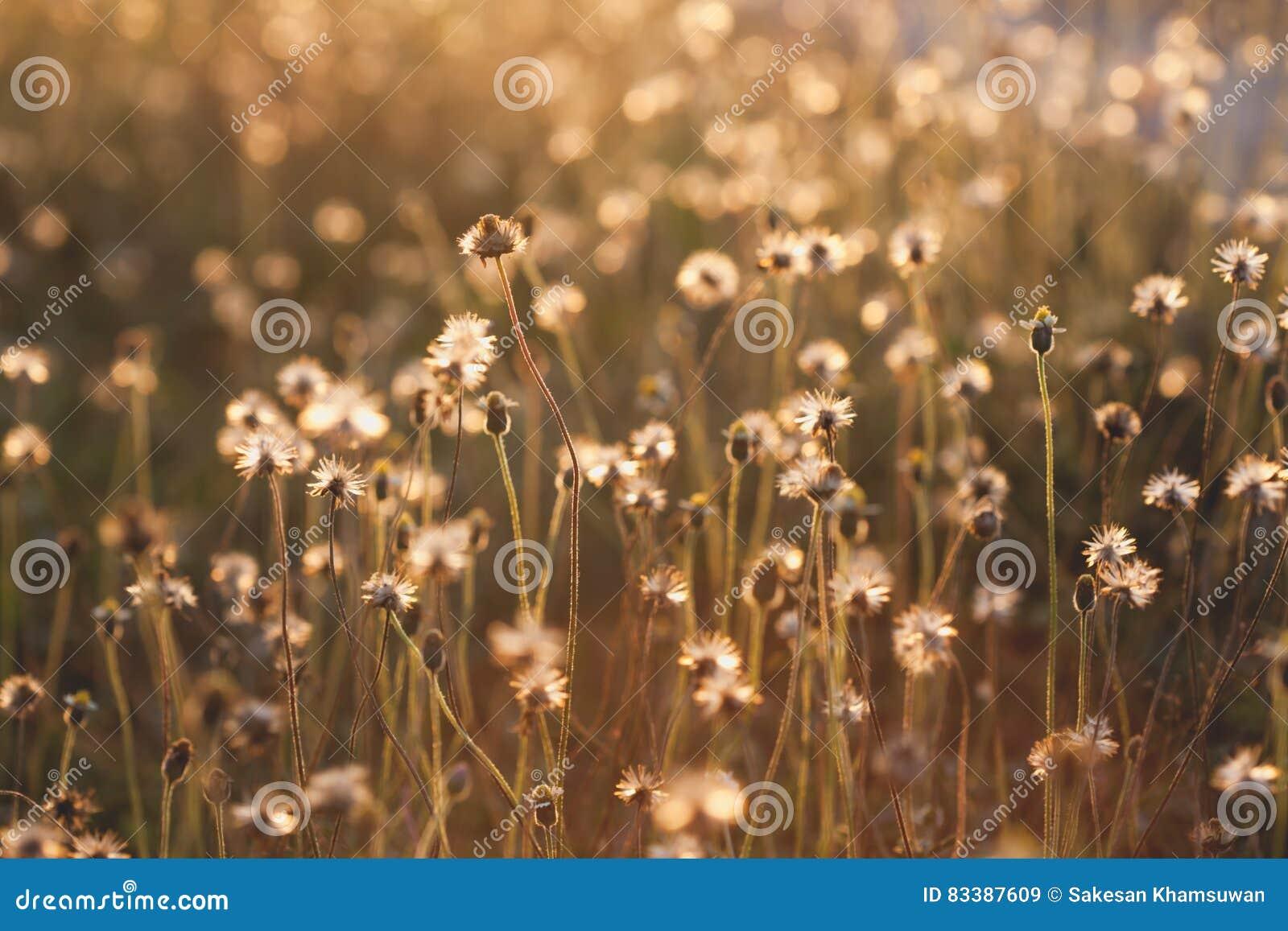 Makro med extremt grund DOF av gräsblomman i pastell