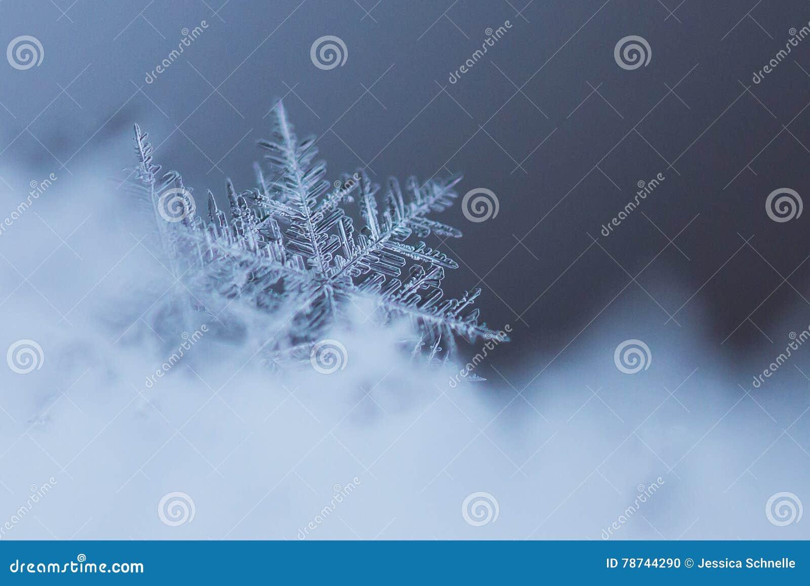 Makro- strzał Śnieżny płatek