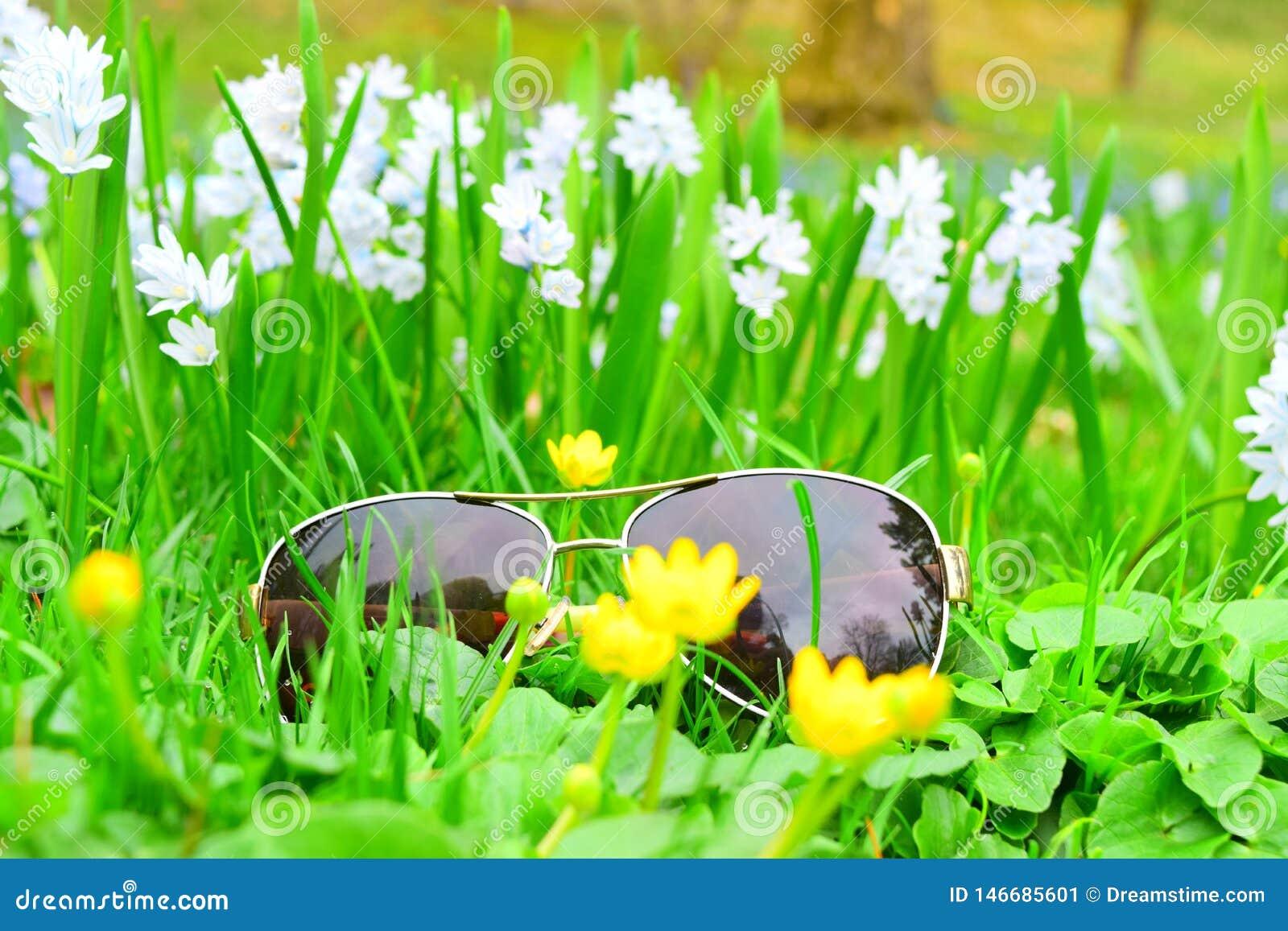 Makro- strzał szkła w białych kwiatach