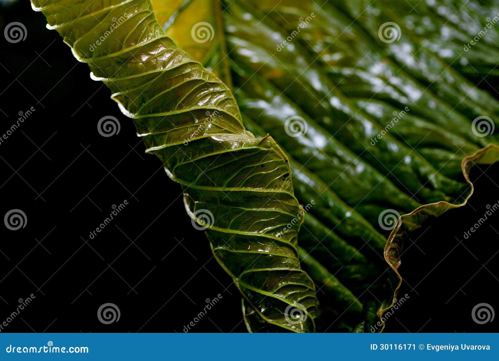 Tło zielony liść