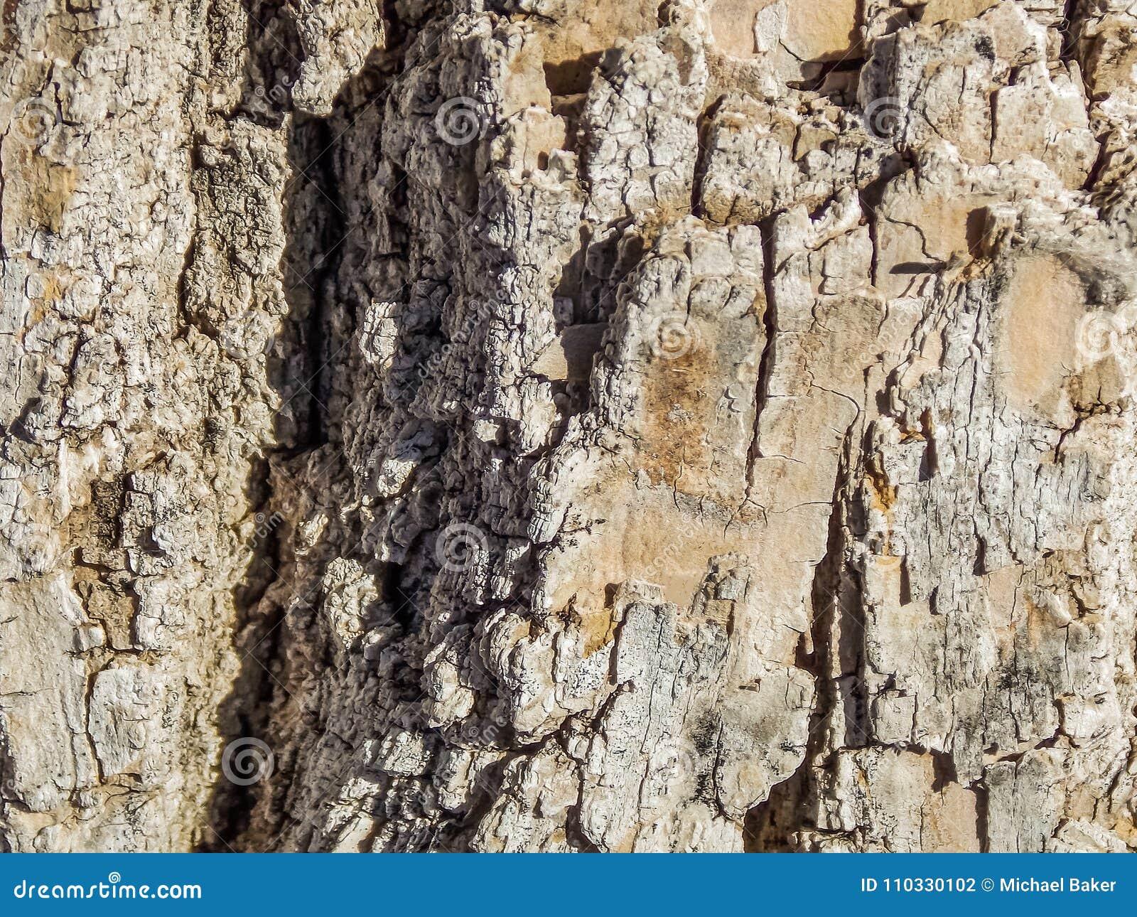 Makro- tekstura Drzewna barkentyna w słońcu