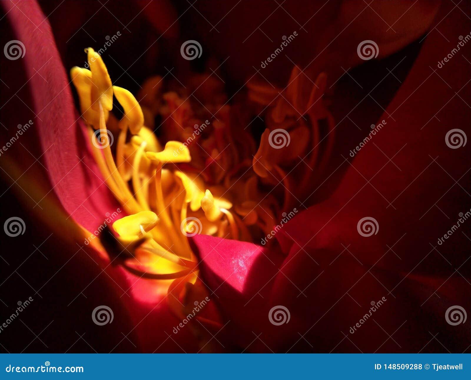 Makro von gelben Blumenstaubgef?ssen