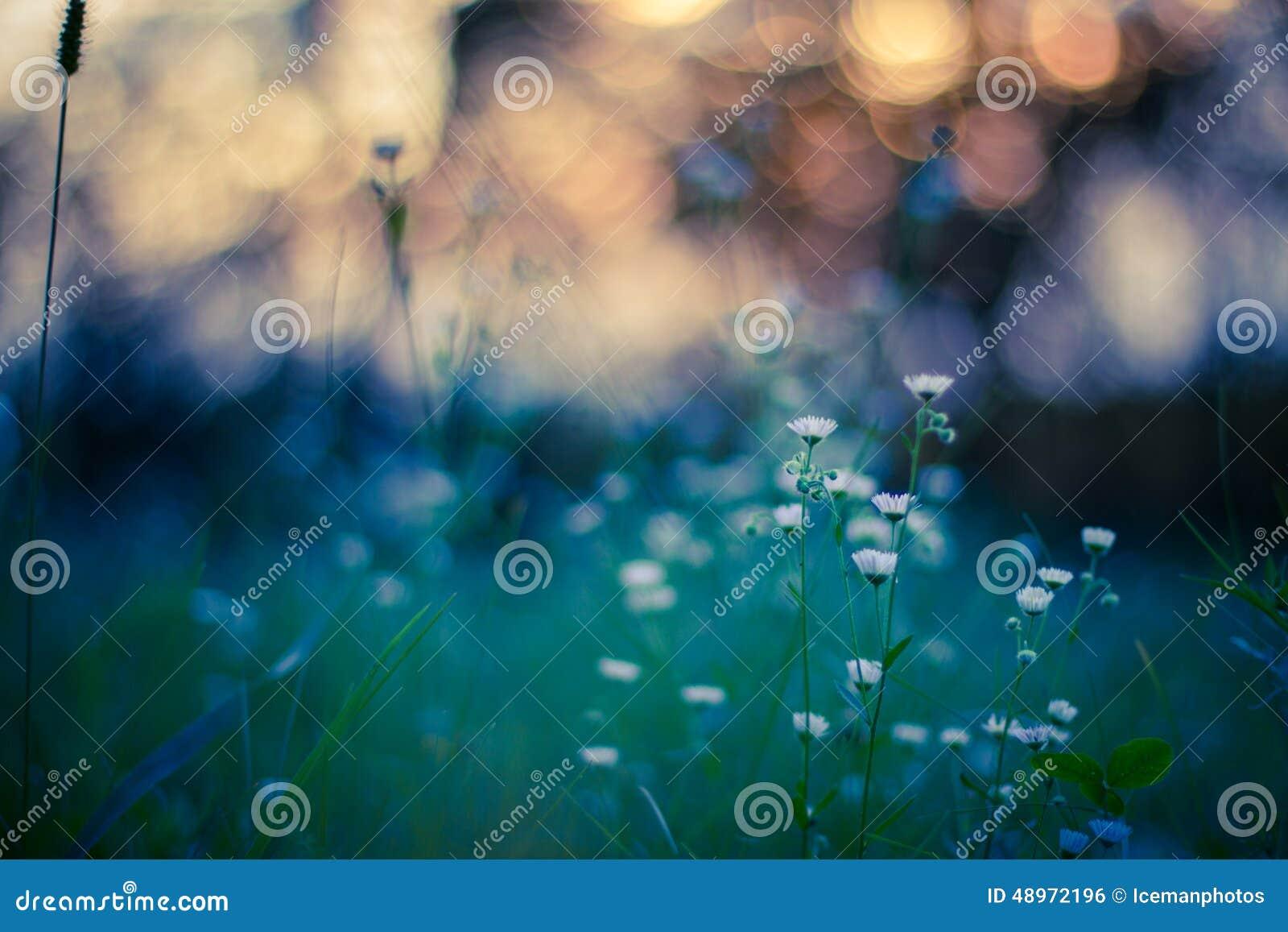 Makroansicht der wilden Blume im Sonnenuntergang mit bokeh