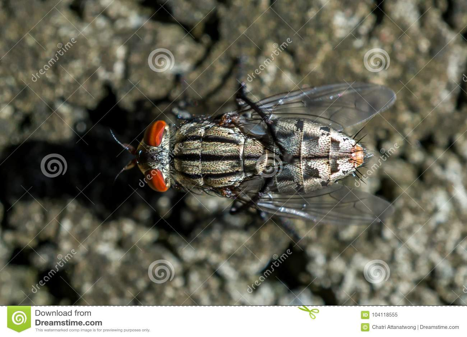 Makrobild av den bästa sikten för klungafluga