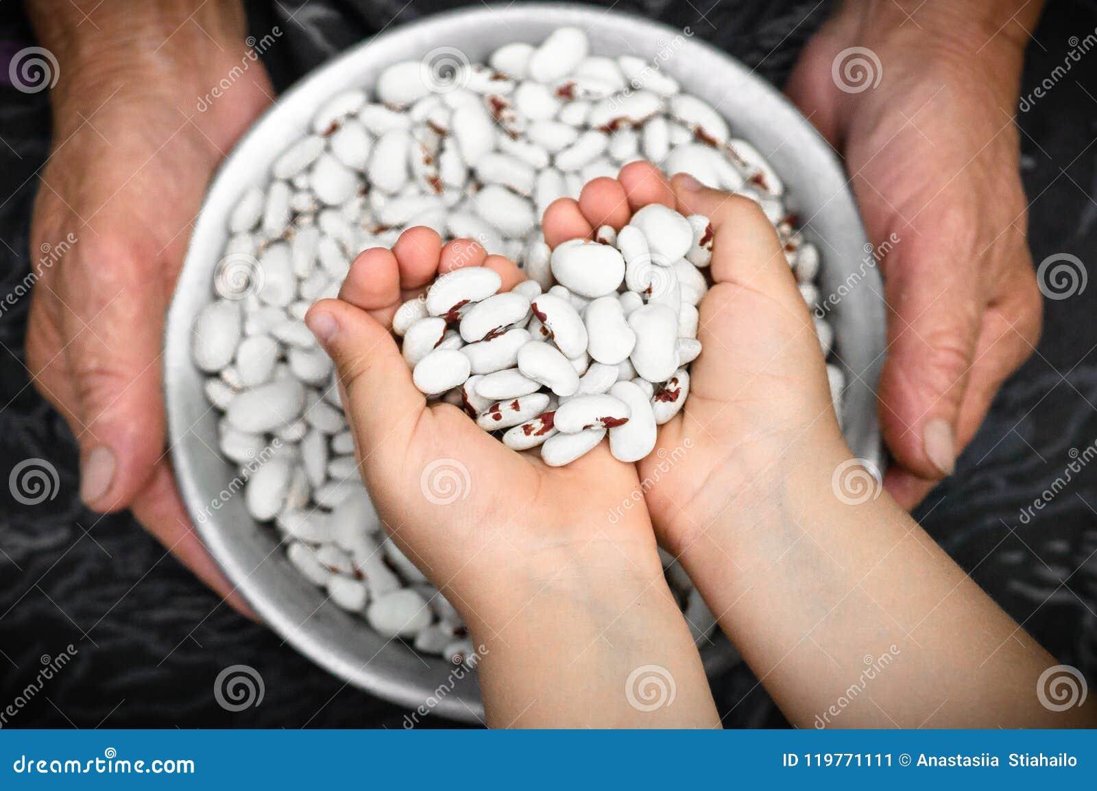 Makroen sköt med grunt djup av fältet av rå vita njurebenas Vita njurebönor med röda fläckar i händerna av farmodern och lilla fl