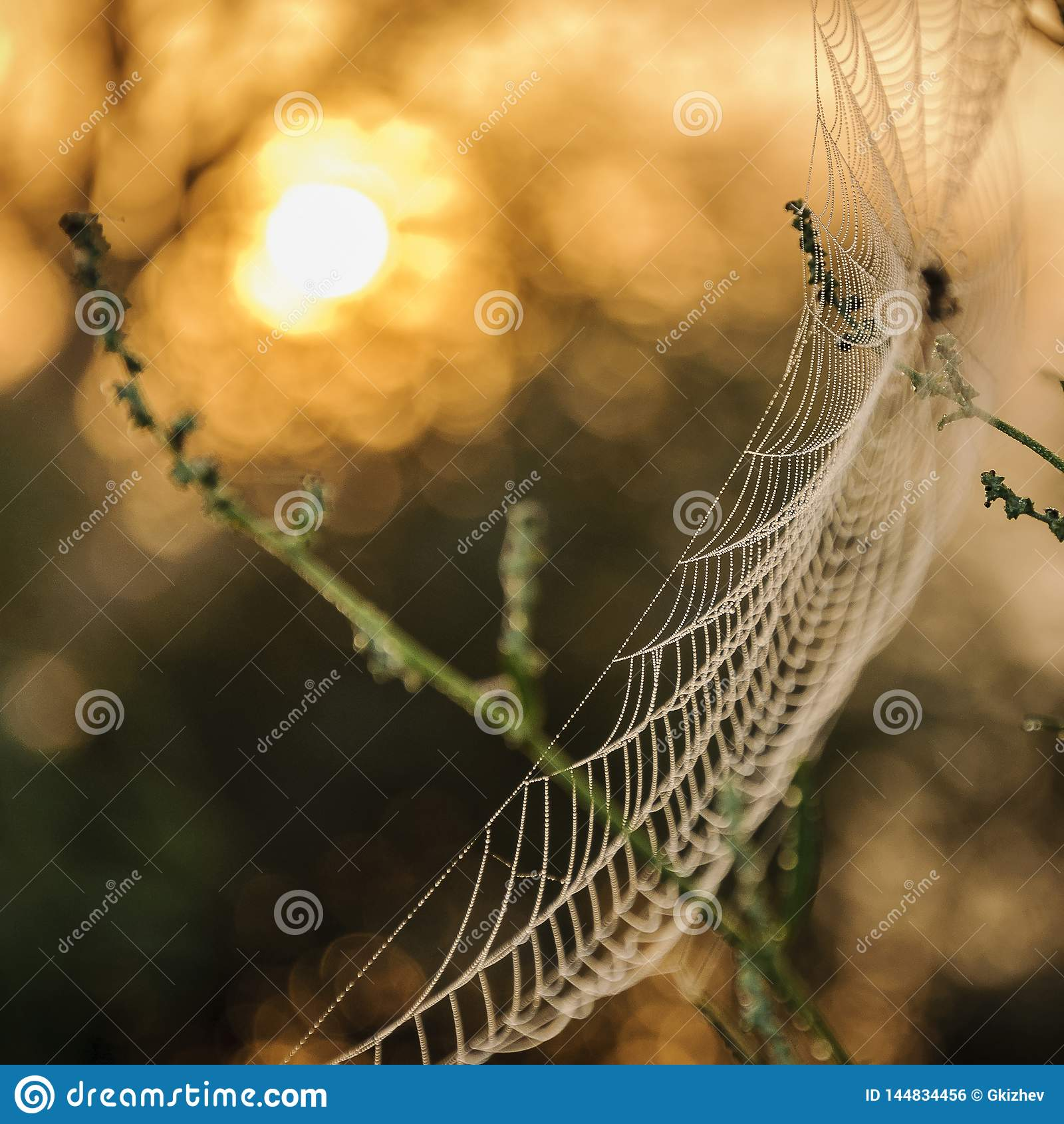 Makrospinnennetz