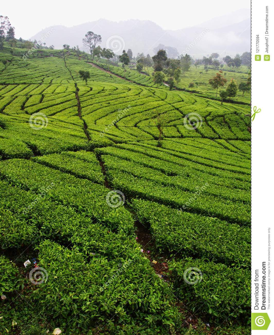 Malabar Tea Plantations Is Located In Bandung. Travel In ...