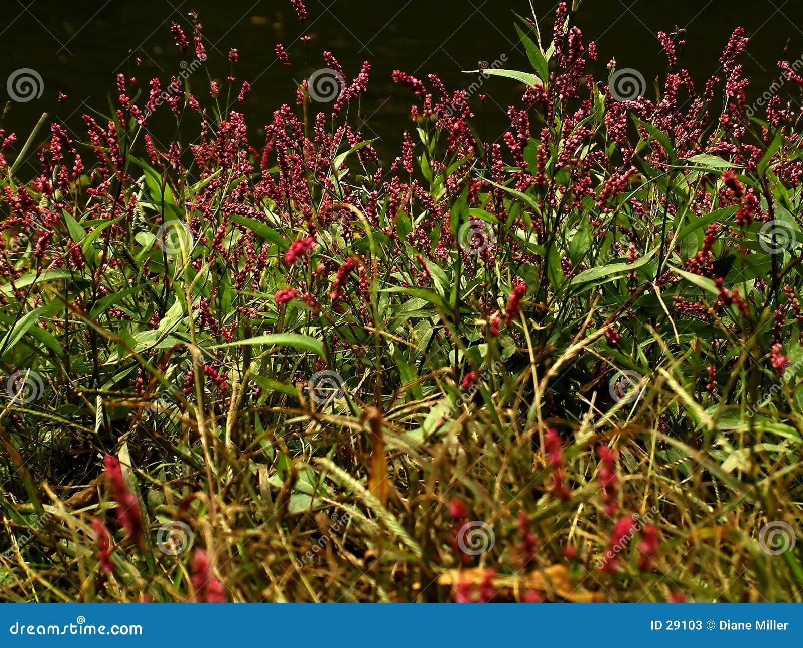 Malas hierbas bonitas