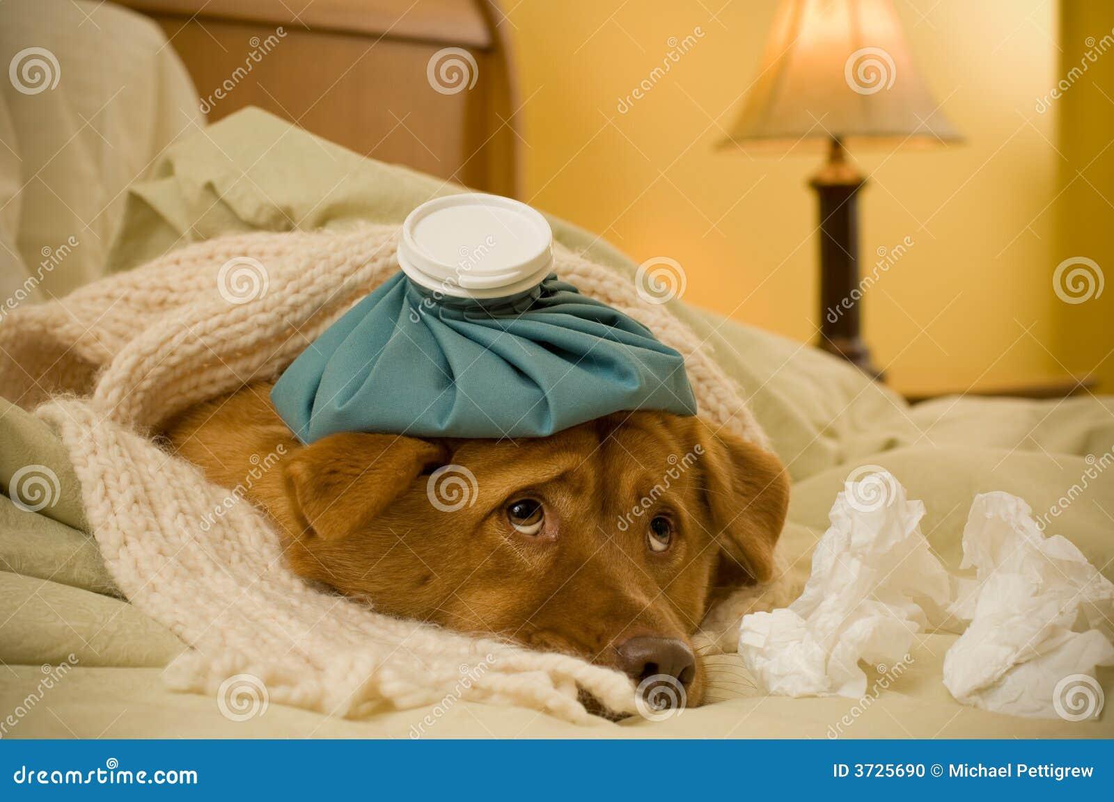 Malato come cane