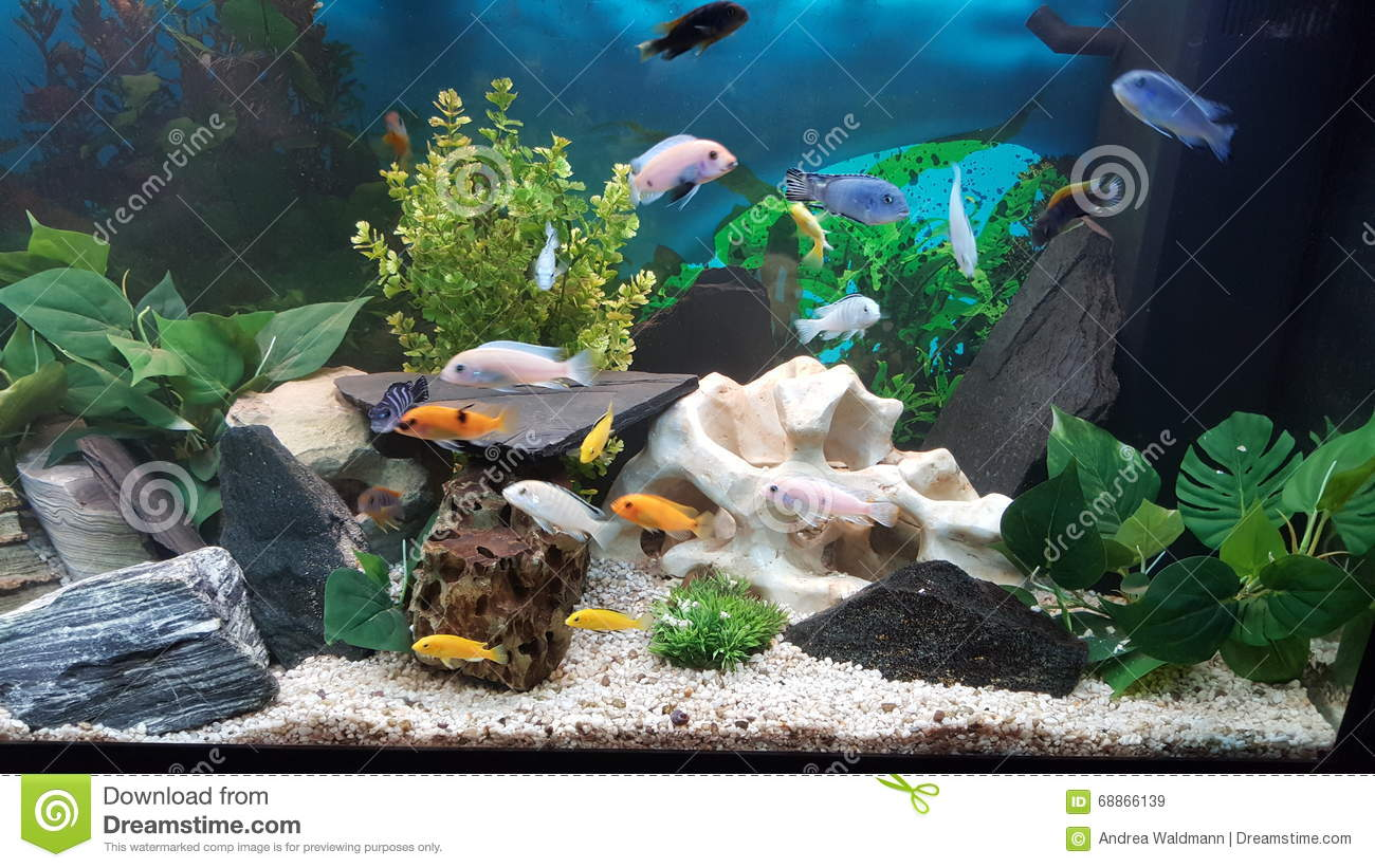 Malawi Tank stock image. Image of shot, cichlids, decorated - 68866139
