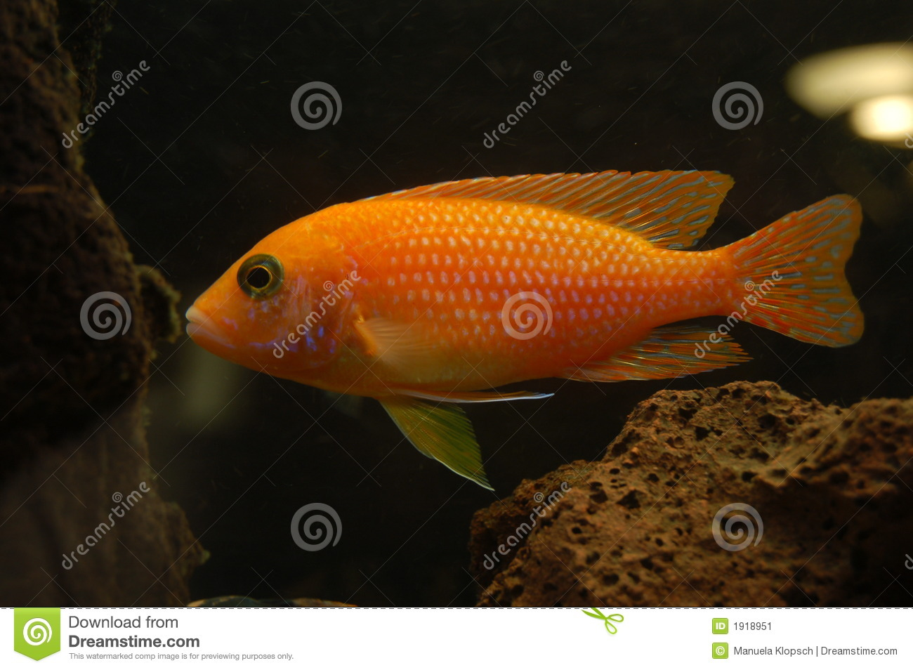 Malawisee fish stock image image 1918951 for What do fish see