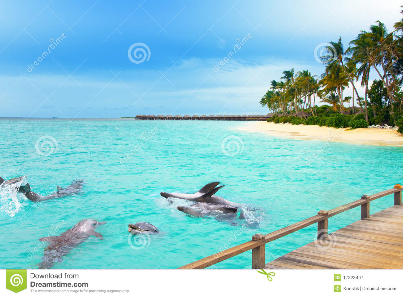maldives dolphins at ocean and tropical island royalty free