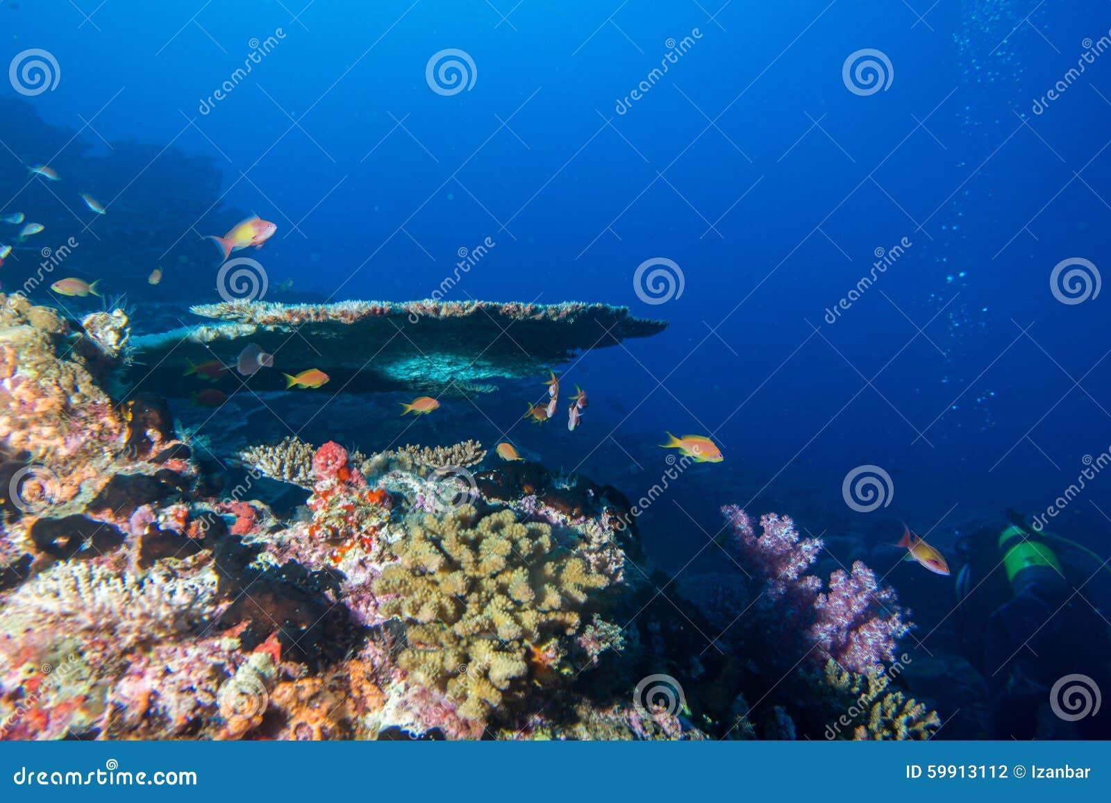 Maldives korali dom dla ryba