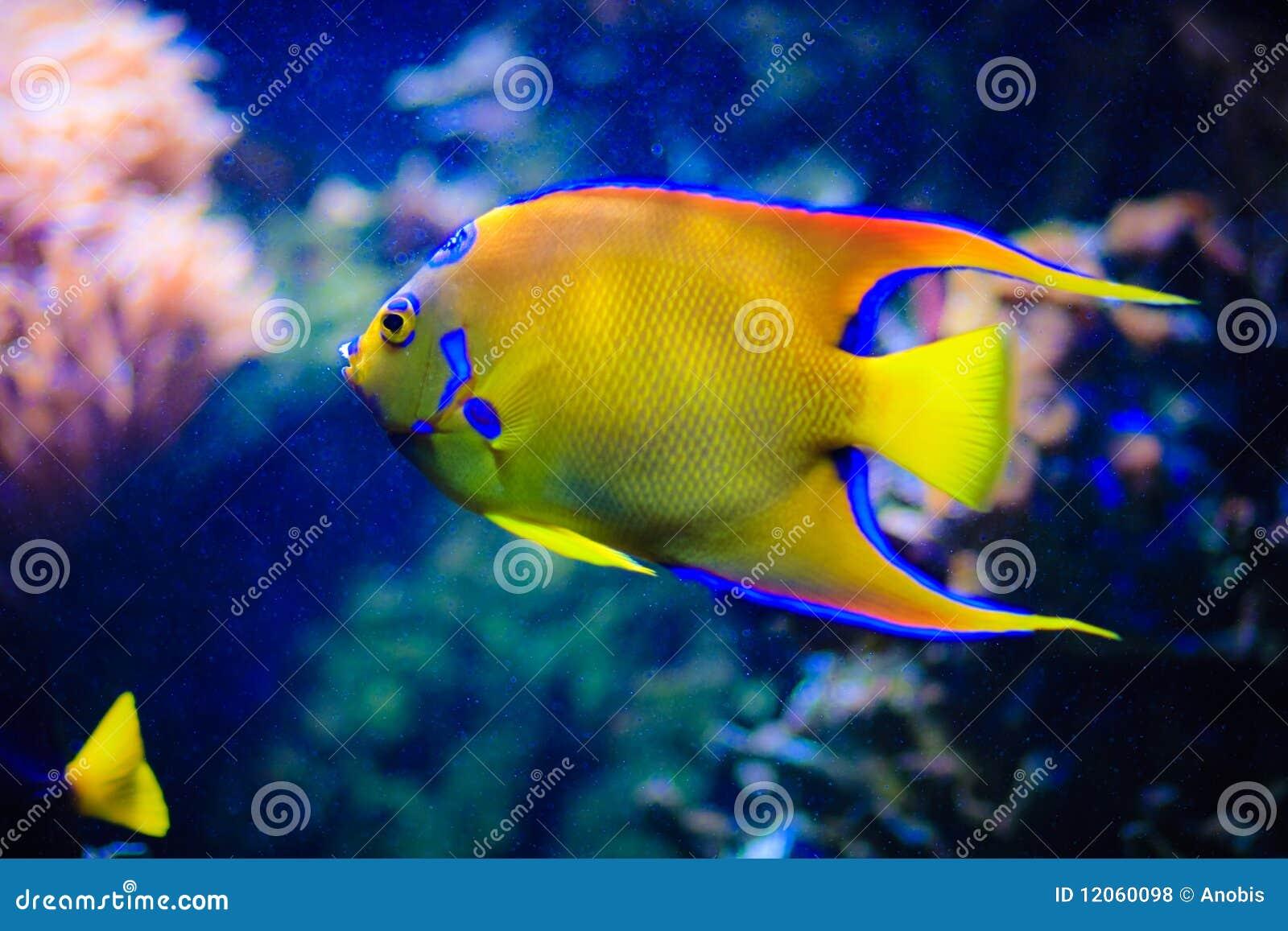 Maldives under vattenvärlden