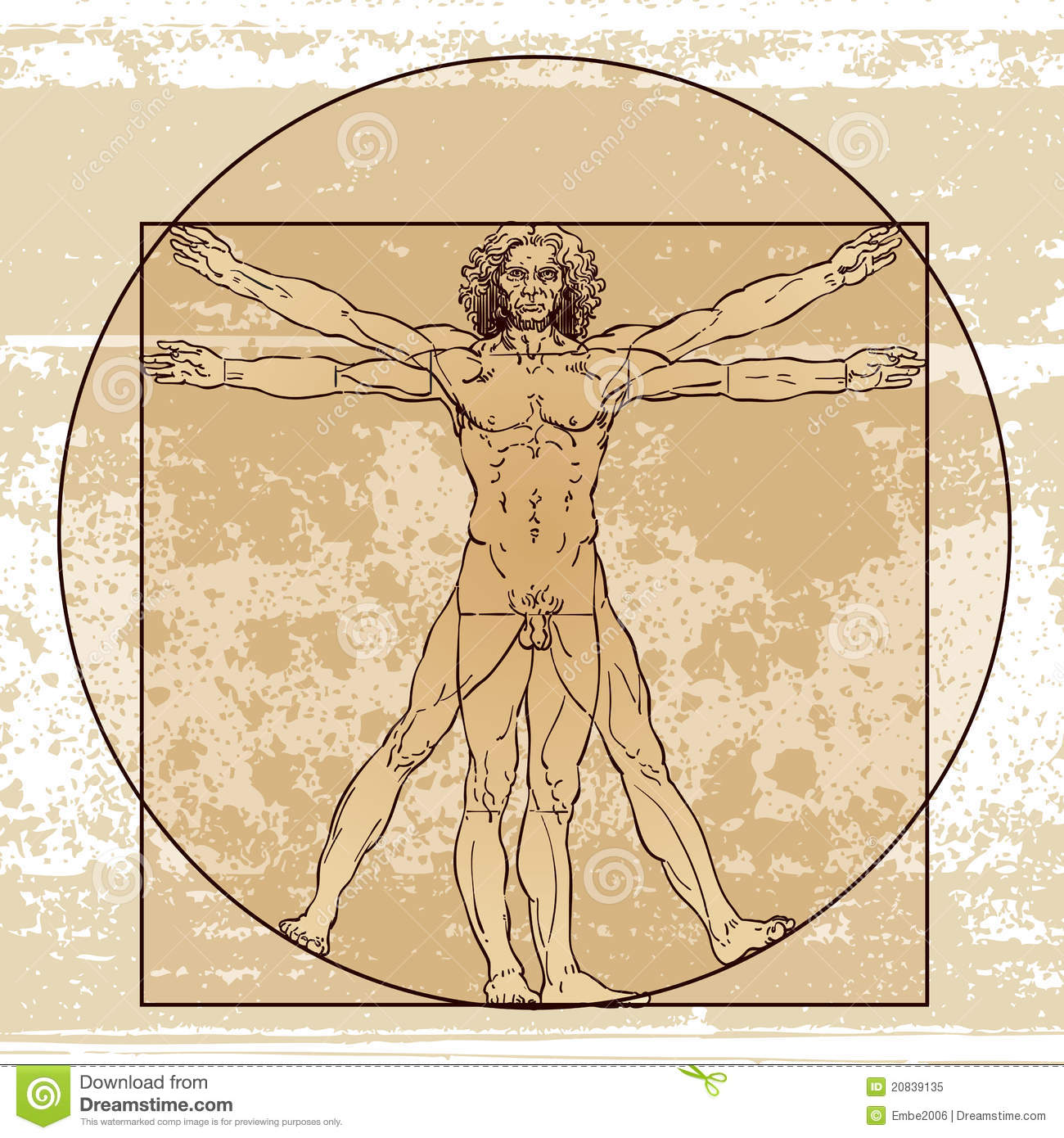 Male Anatomy editorial image. Illustration of growing - 20839135