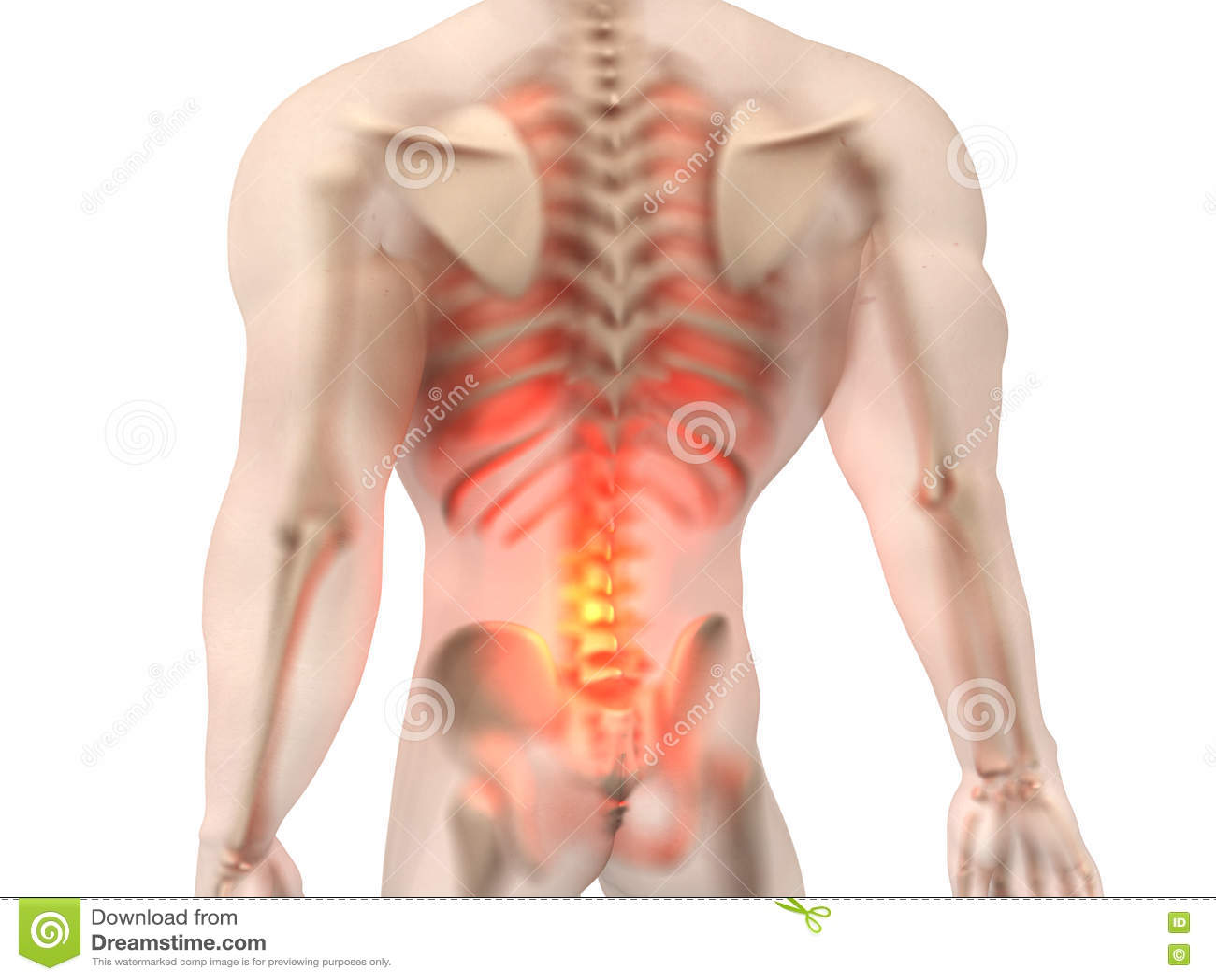 Male Anatomy - Back Pain stock illustration. Illustration of healthy ...