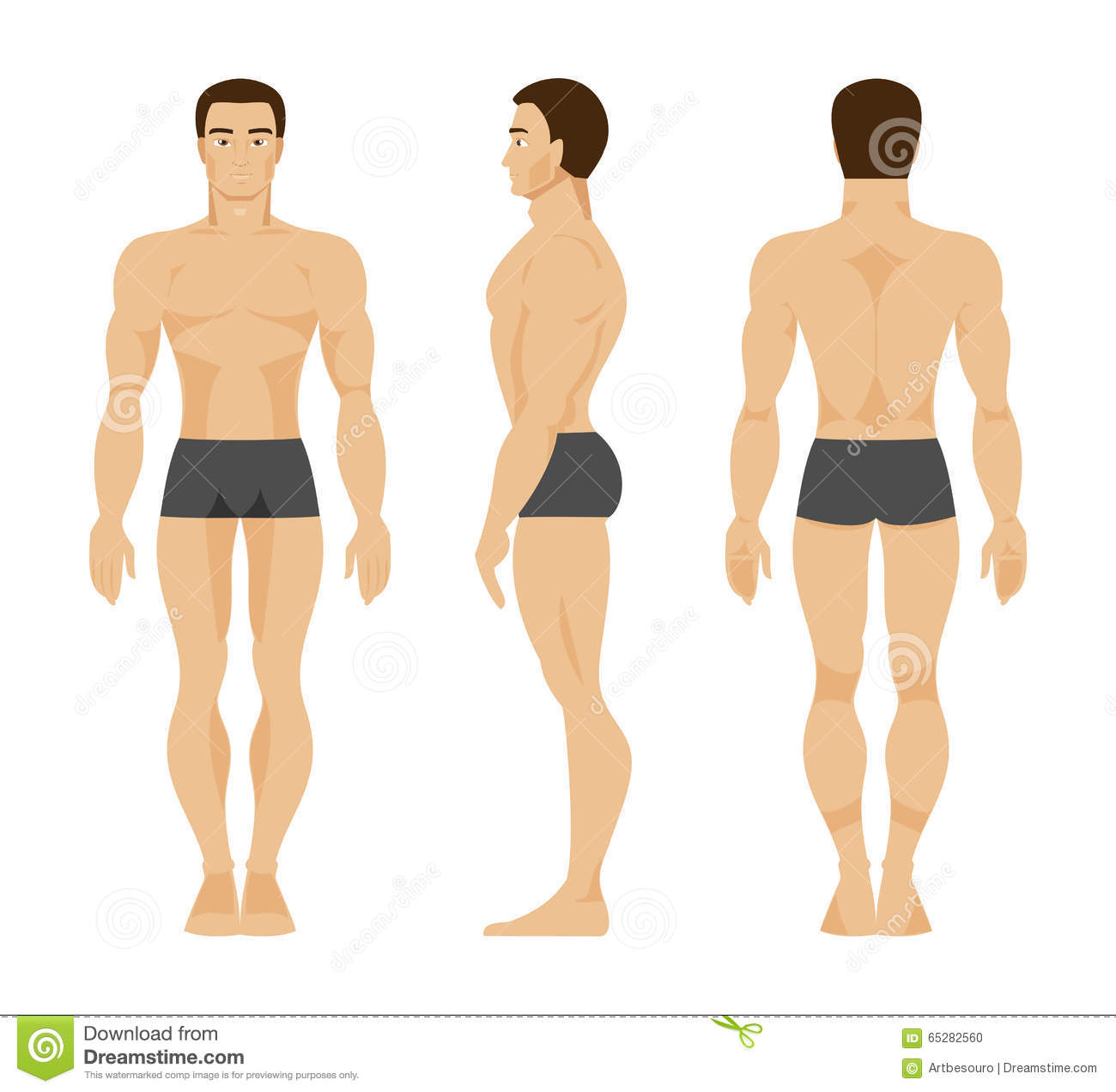 Male Anatomy. Vector Illustration Stock Vector - Illustration of ...