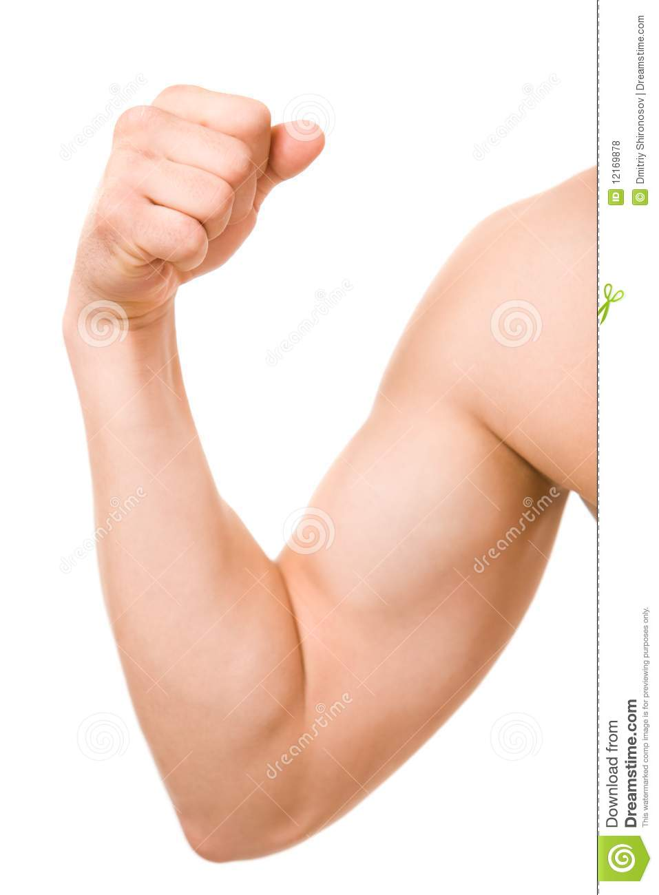 male arm stock photo image of pump elbow attractive 12169878
