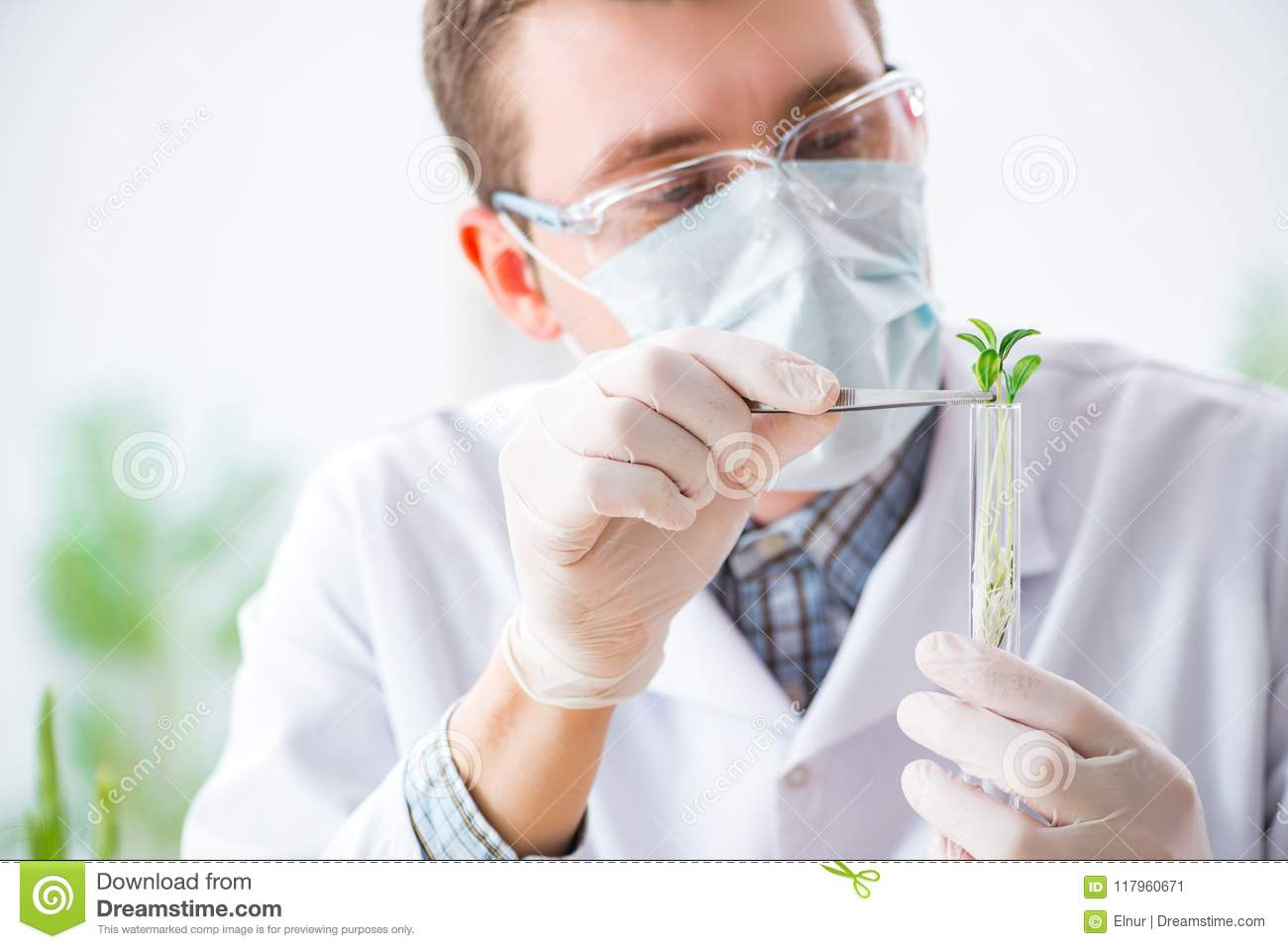 The Male Biochemist Working In The Lab On Plants Stock Image Image