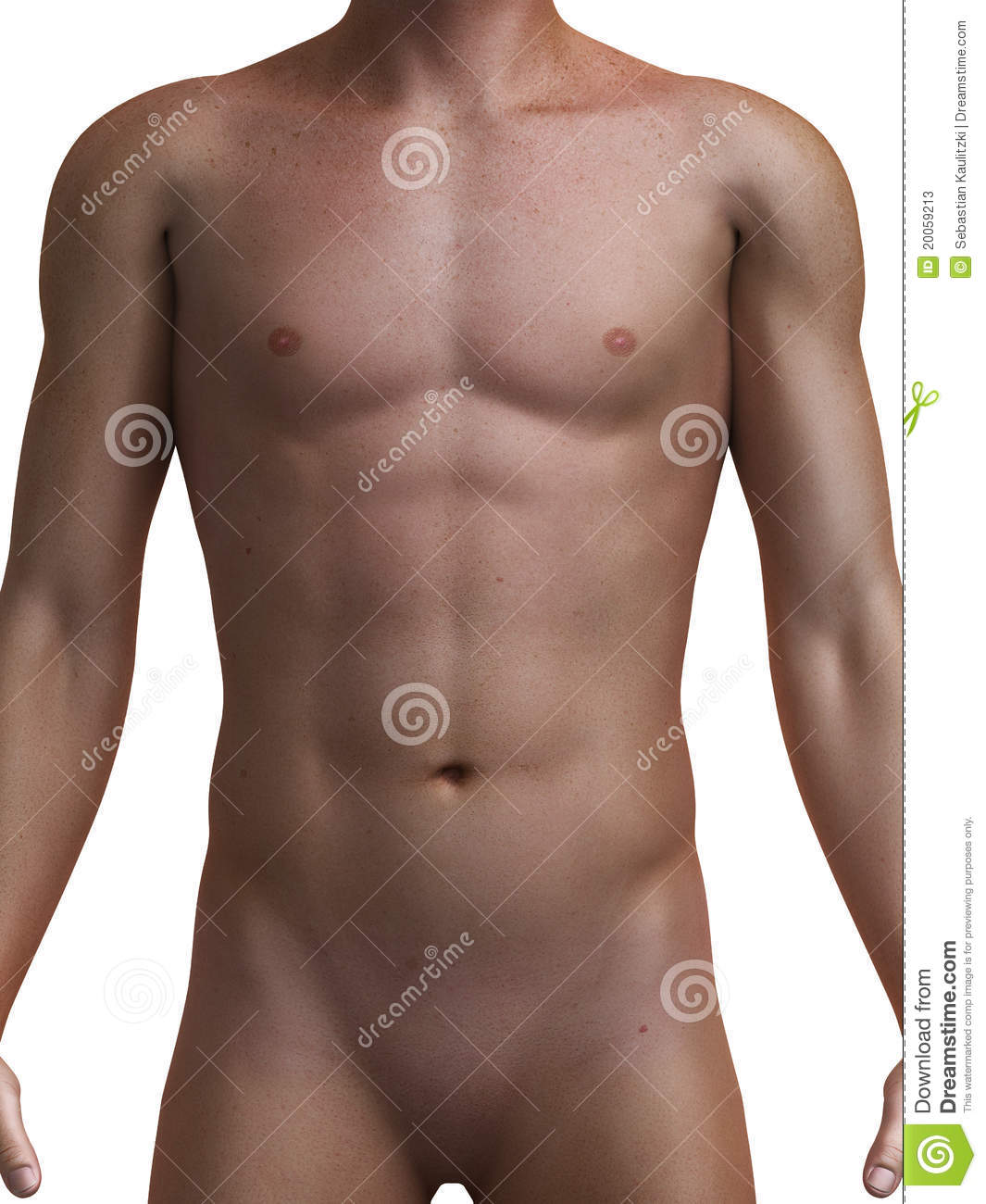 male body stock illustration. illustration of athlete - 20059213