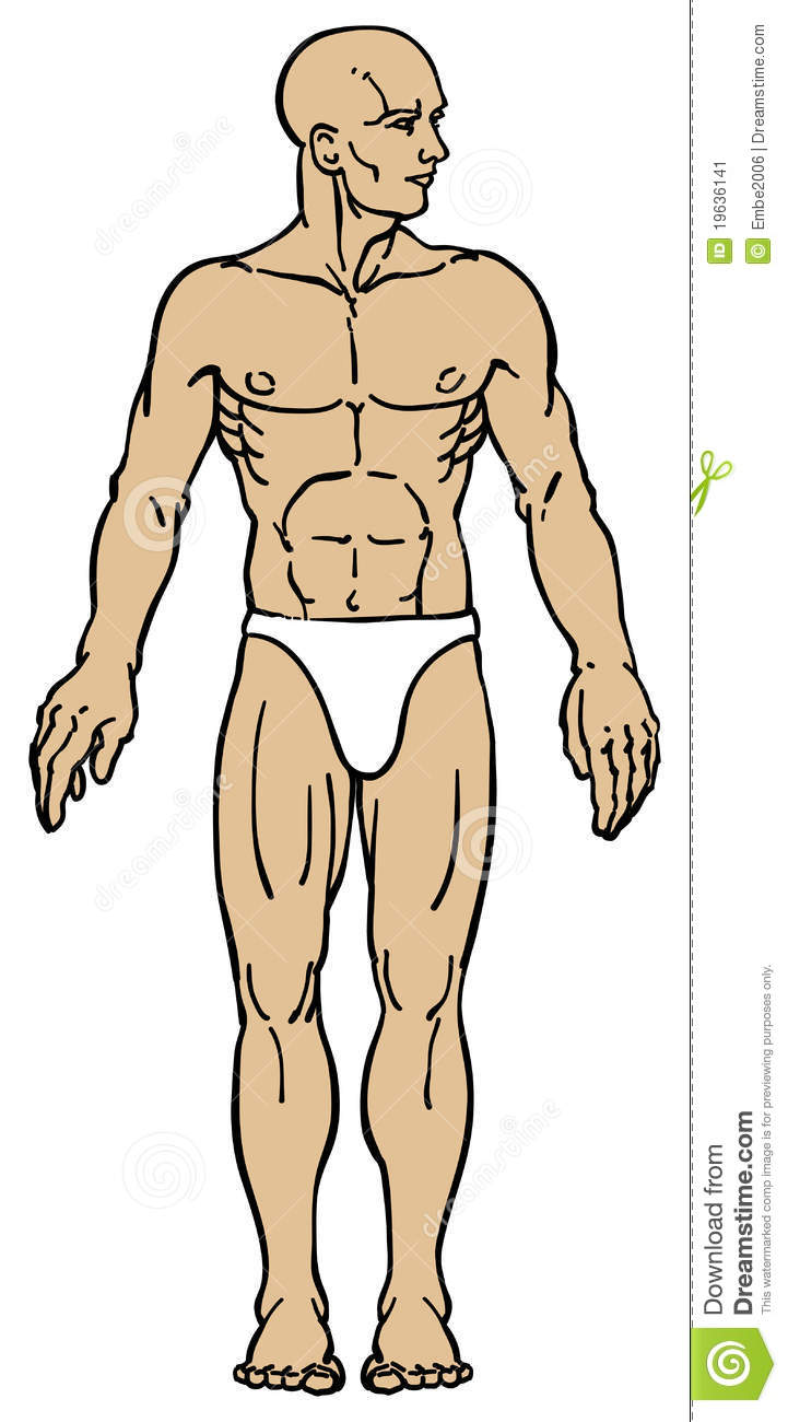 Male Body Anatomy Stock Image - Image: 19636141