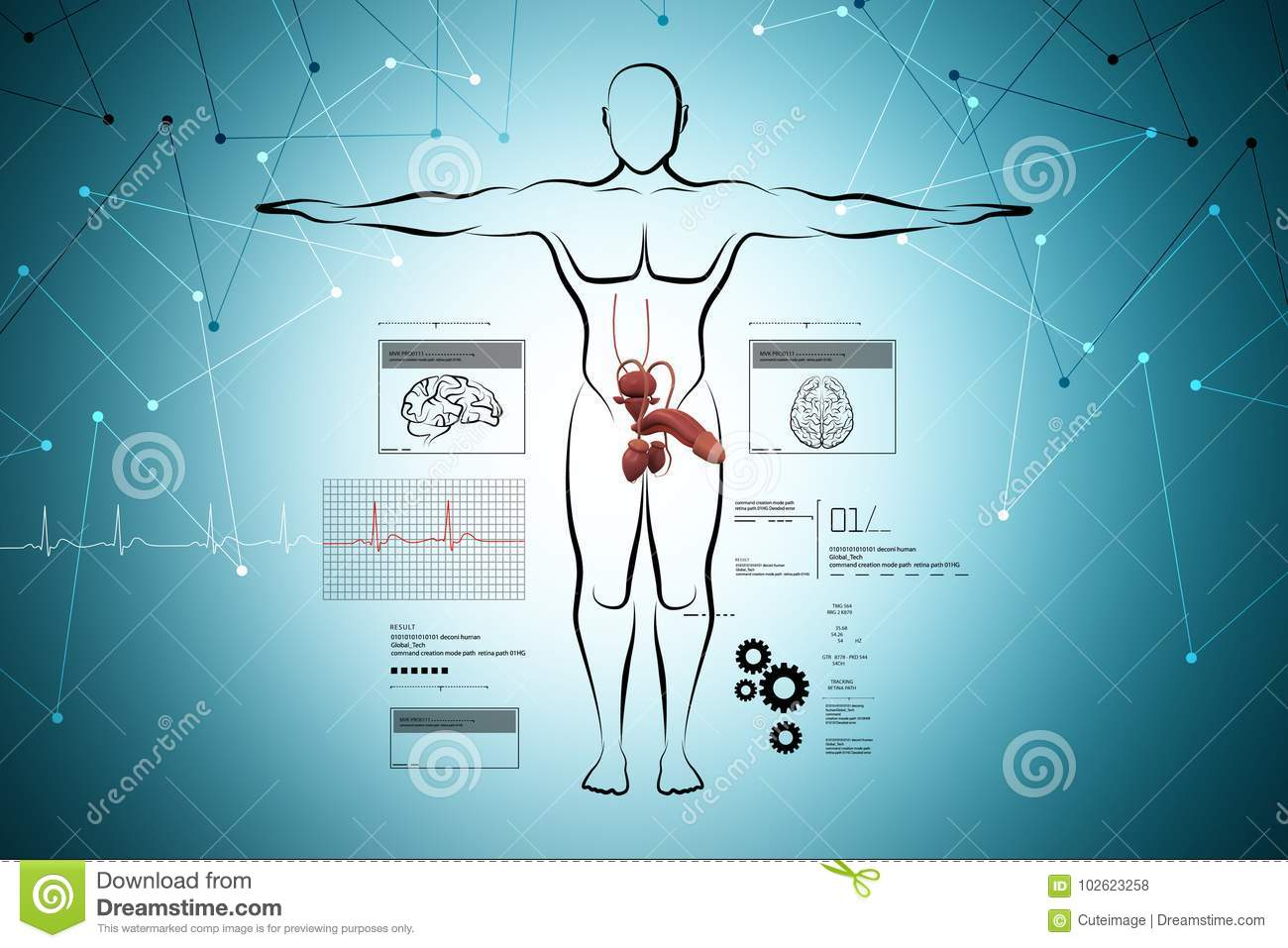Male Body Sketch With Urinary System Stock Illustration