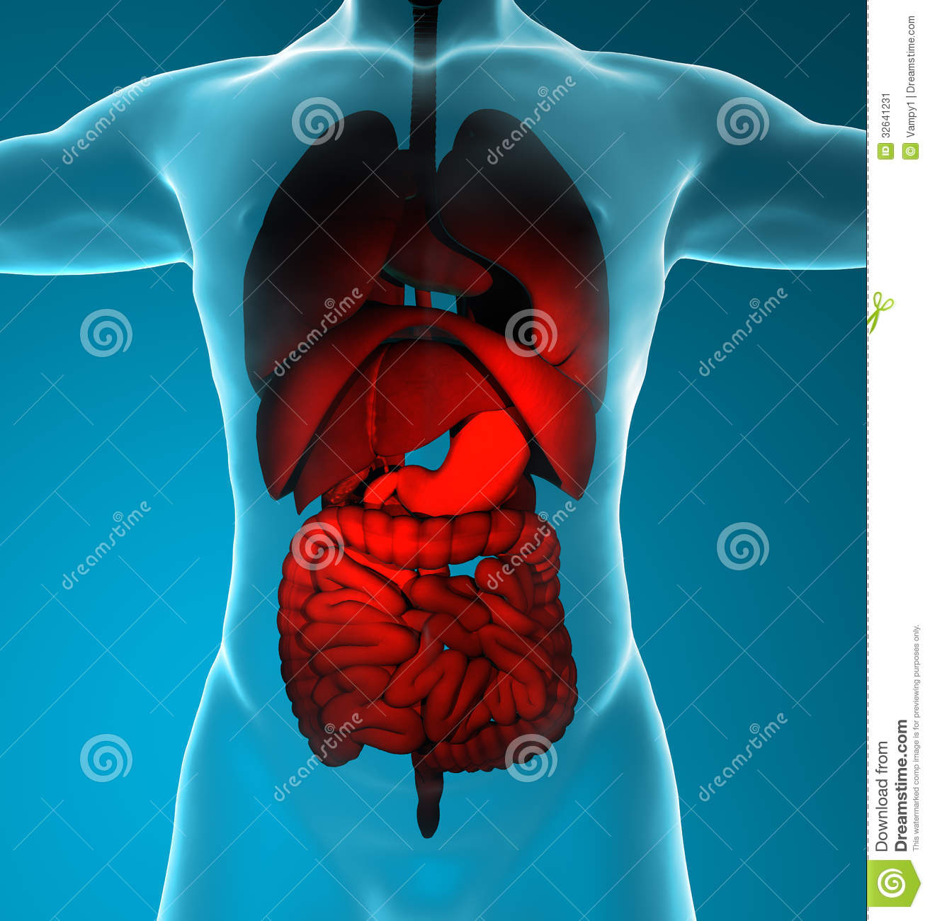 Male Digestive And Respiratory System Stock Illustration ...
