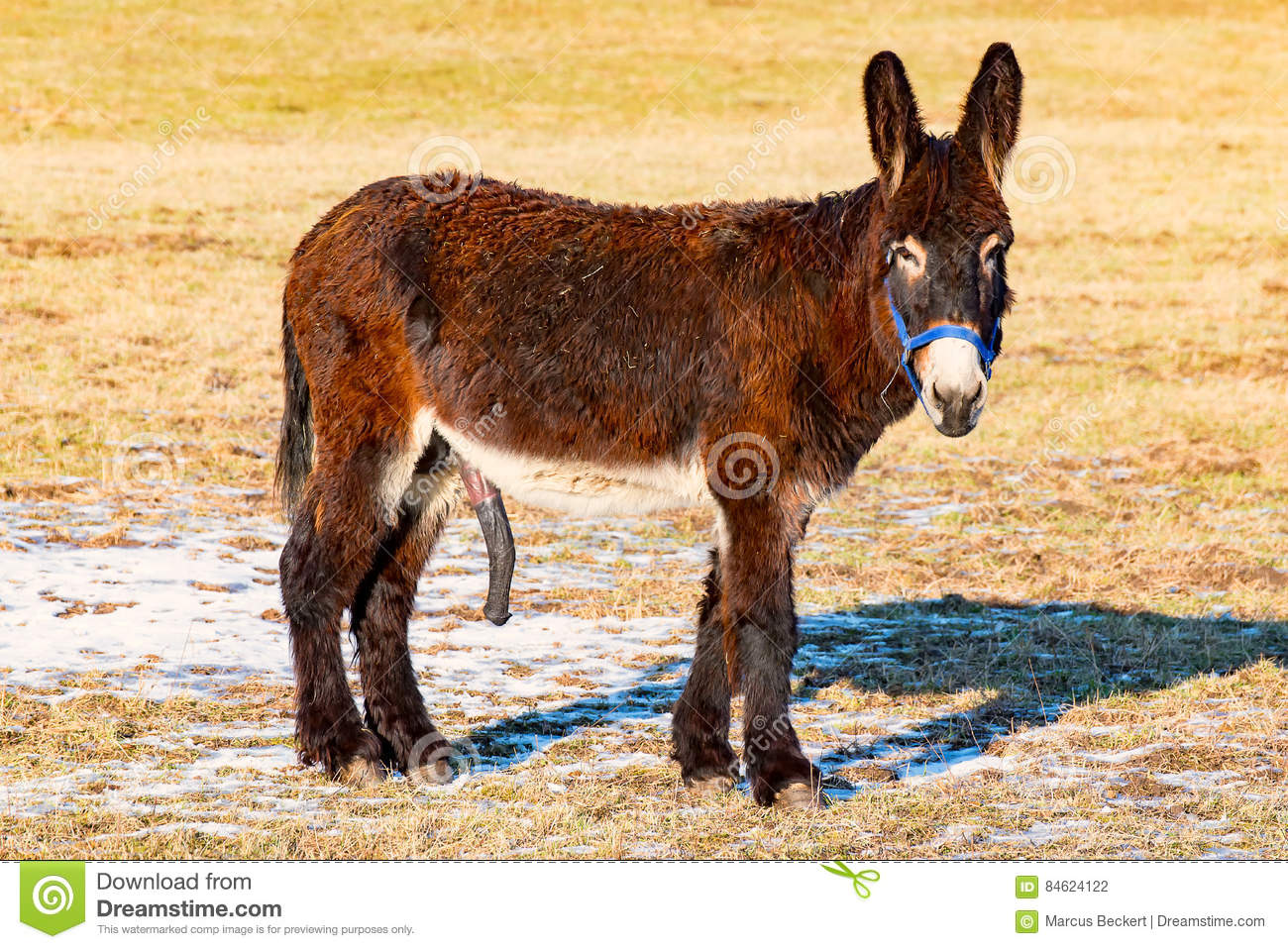 videos of donkey shows