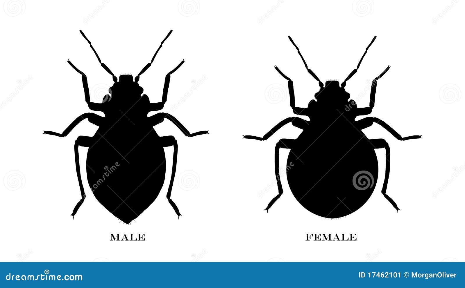 Stock Image Male Female Black Illustrated Bedbugs Image17462101 on Bed Bugs United States