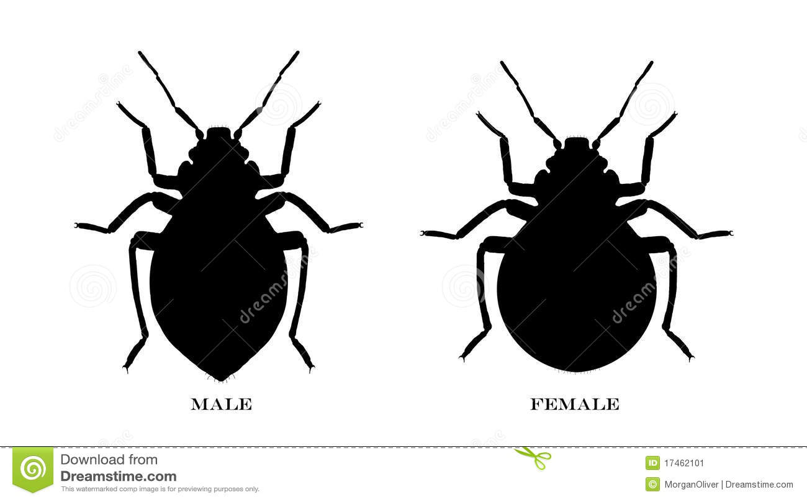 Male And Female Black Illustrated Bedbugs Stock Illustration