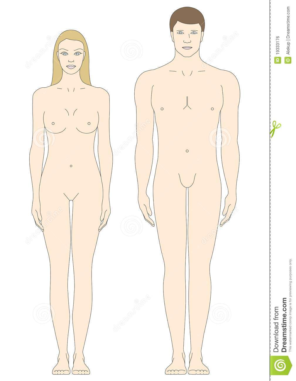 Male And Female Body Templates Stock Vector - Illustration of female ...