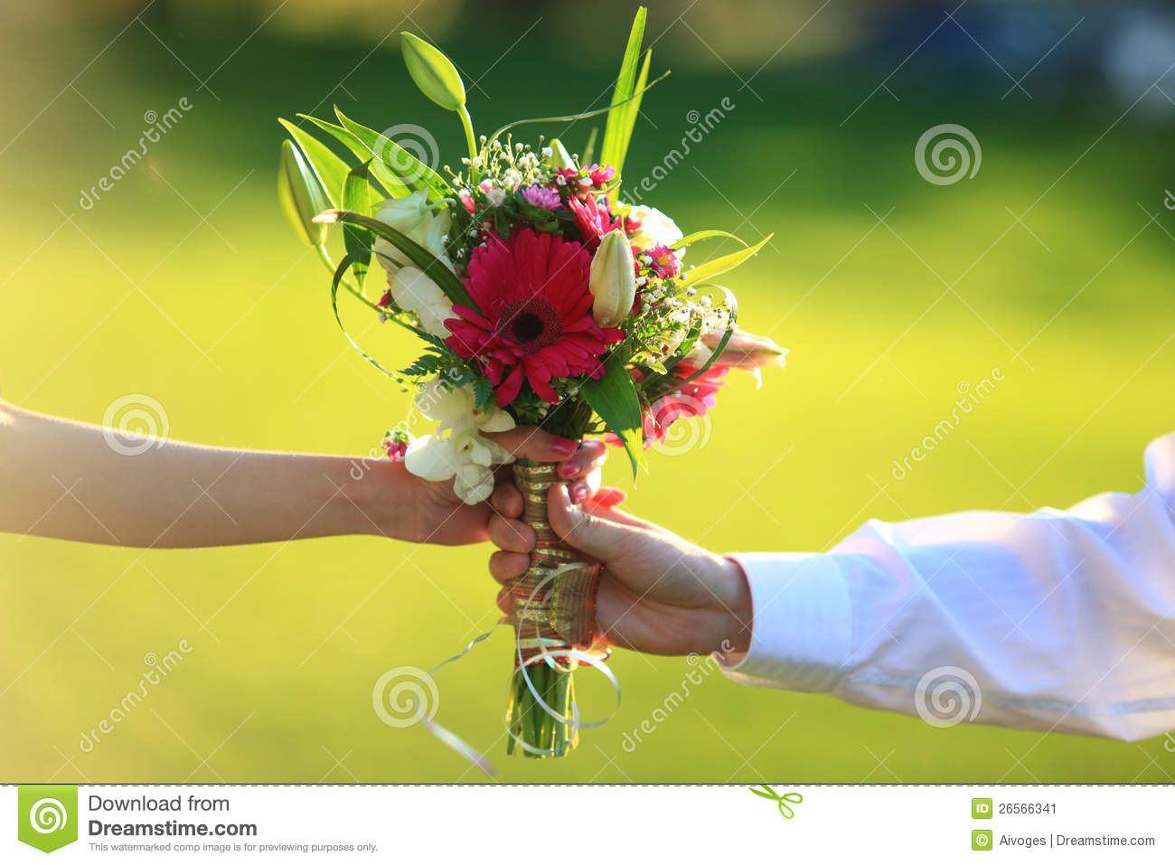 Hand Holding Flower Photography